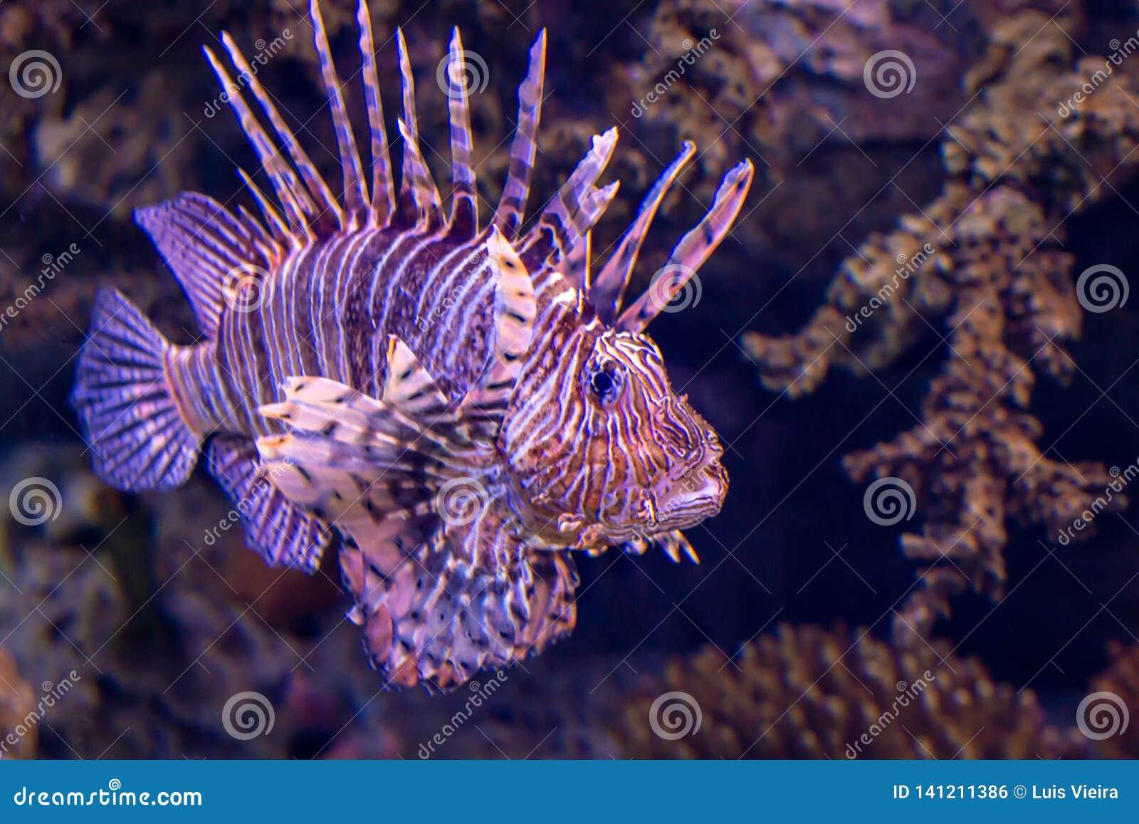 El ryby lwa lokalizacji sharm sheikh