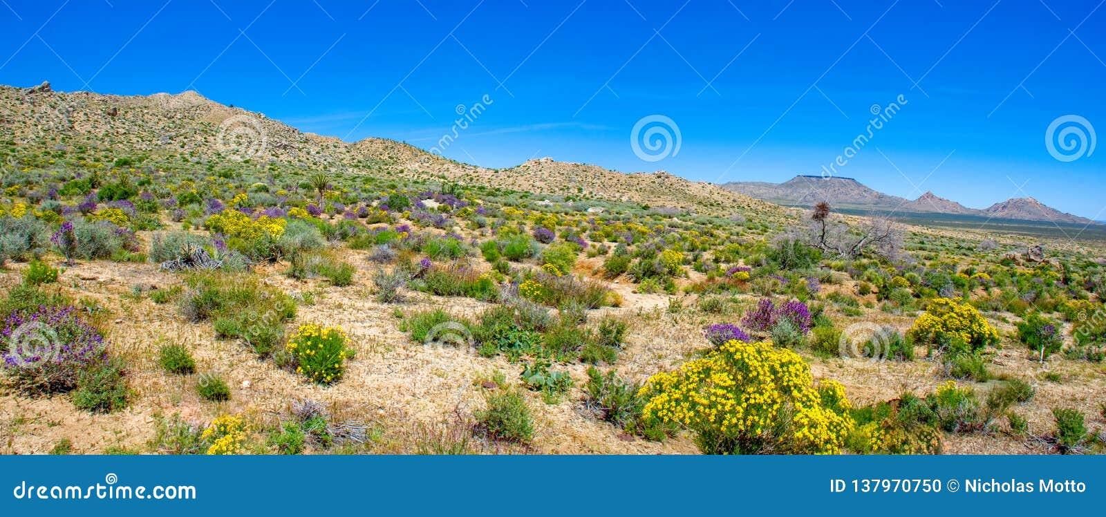 El sabio púrpura y las flores salvajes amarillas exhiben los colores de Pascua