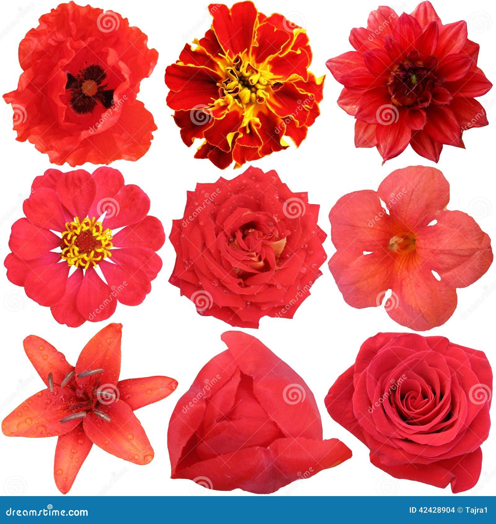 El sistema de flores rojas