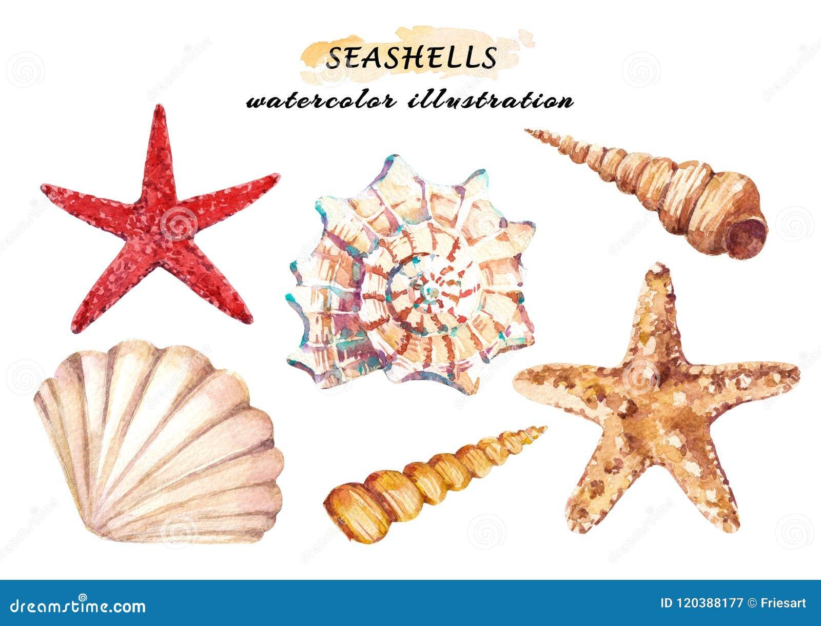 El sistema de la acuarela de vida subacuática se opone - las diversas conchas marinas y estrellas de mar tropicales