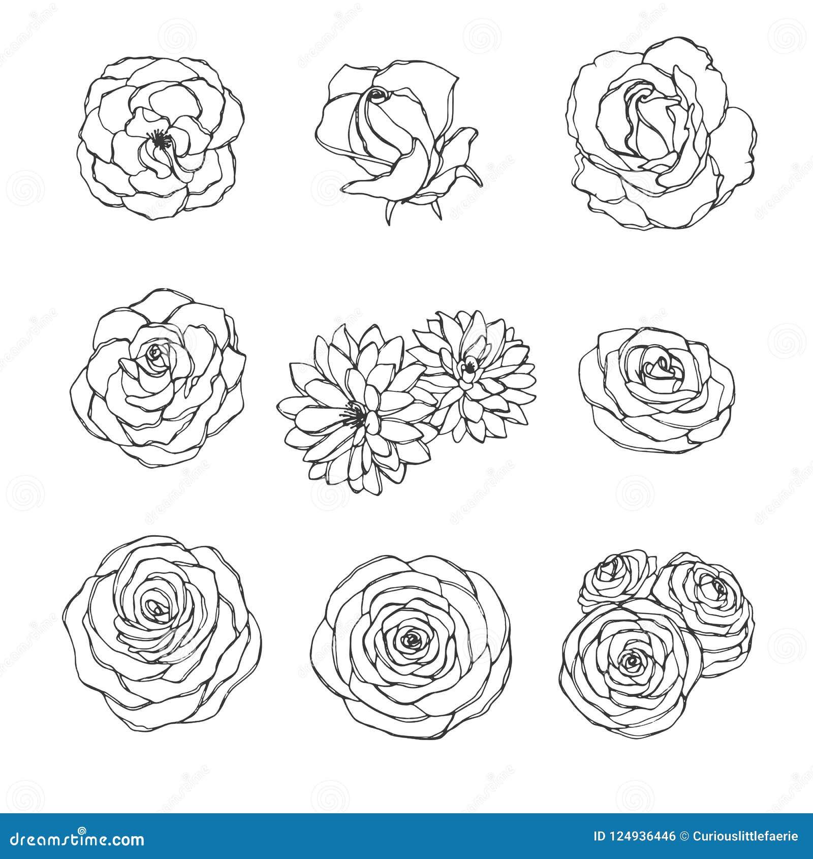 El sistema dibujado mano del vector del esquema de las flores subió, de la camelia, de la peonía y del crisantemo aislado en el f