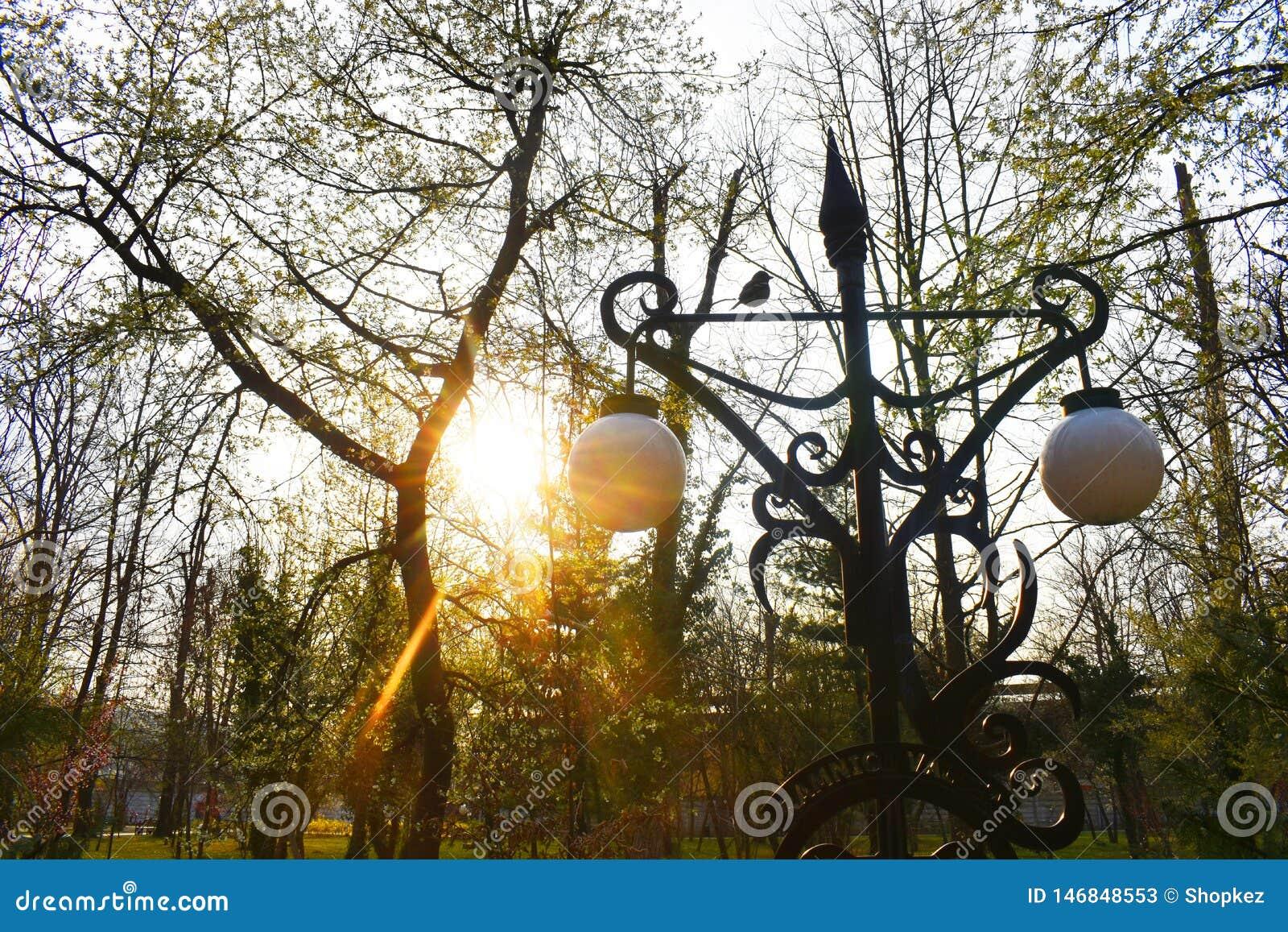 El sol brillante detr?s de ramas en el parque en un d?a de primavera muy hermoso