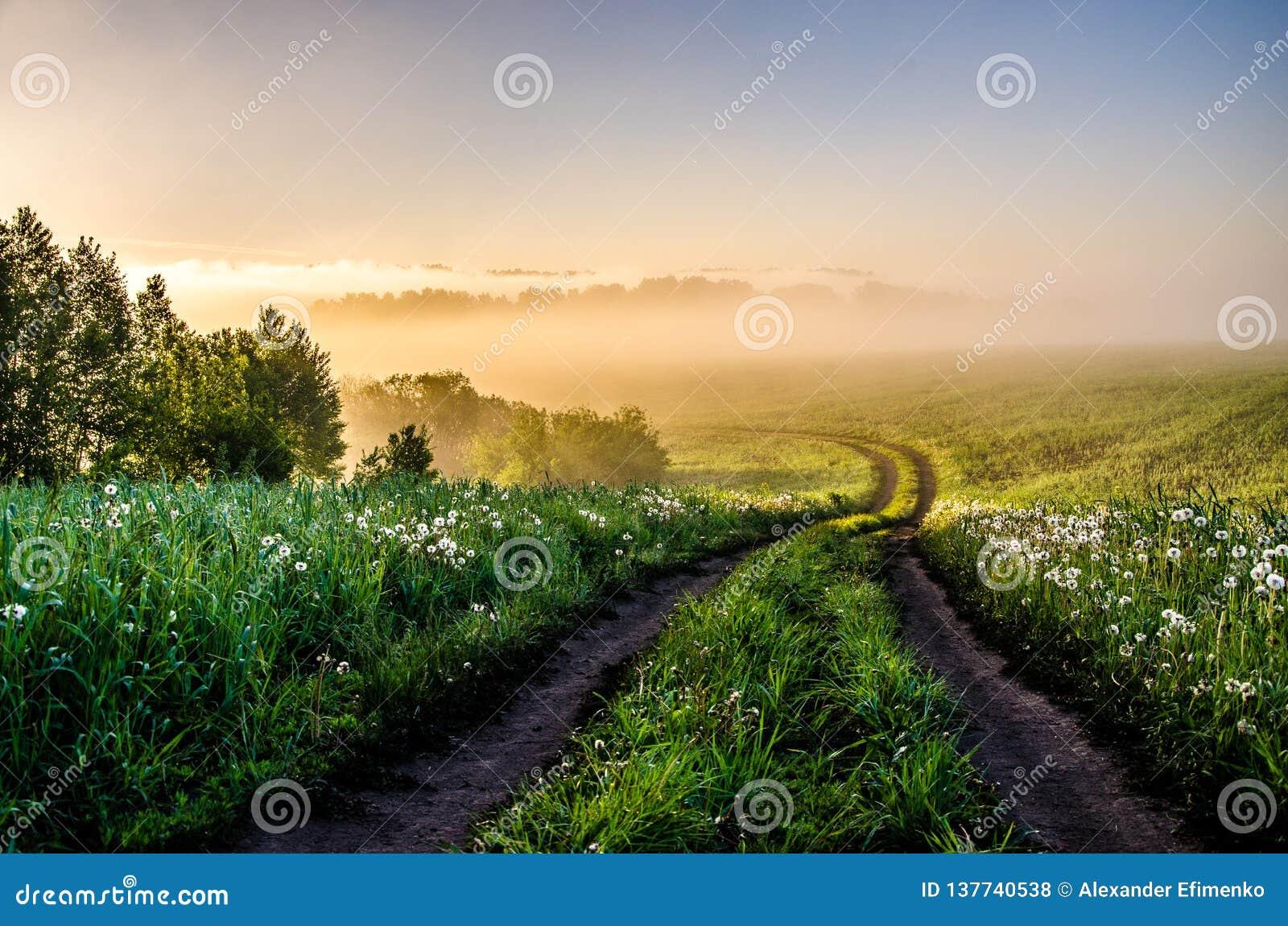 El sol se levanta sobre las nubes del mar y del oro bosque que oculta en la niebla Camino de bosque