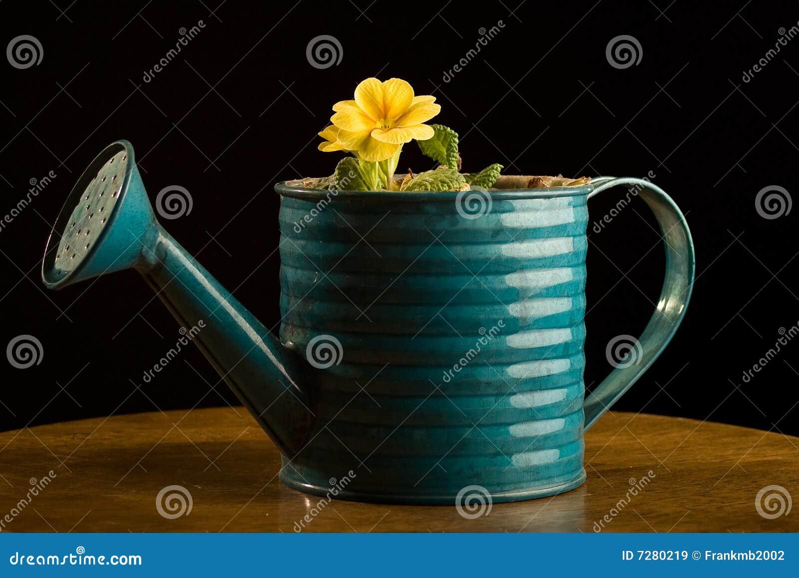 El solo crecimiento de flor amarillo en wattering puede.