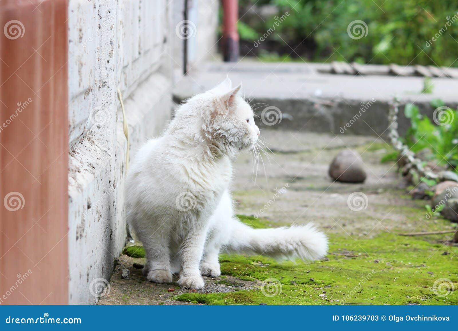 El solo gato sin hogar blanco con los ojos anaranjados está presentando al aire libre en un día soleado