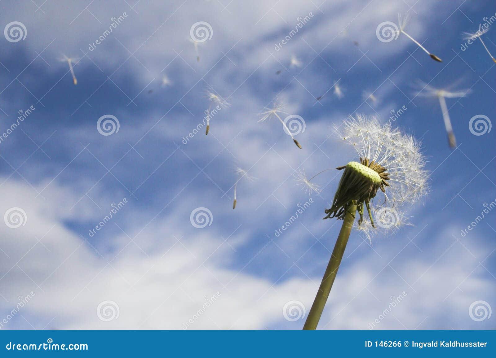 El soplar en el viento