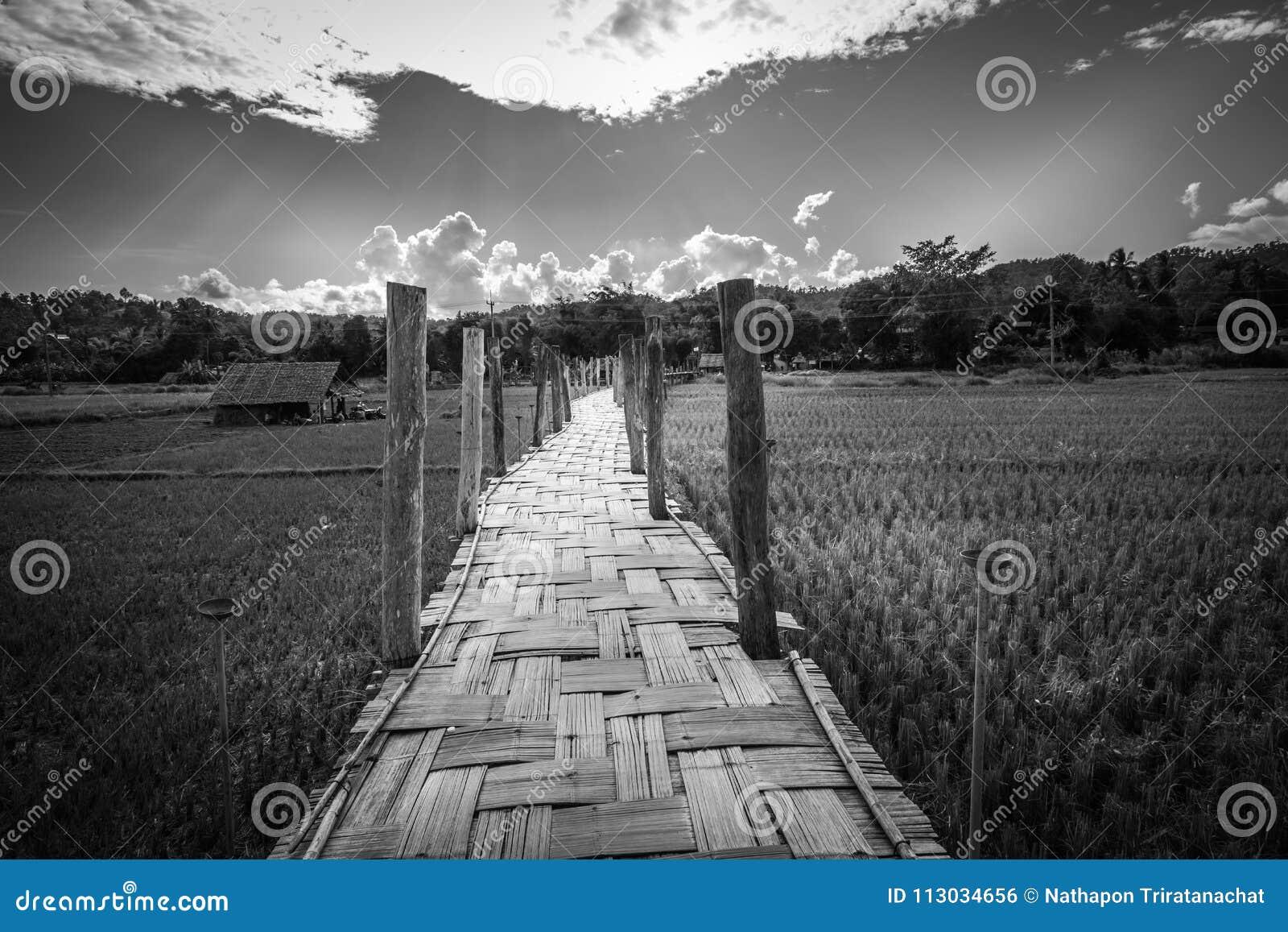 El Su Tong Pae Bridge, el puente de bambú de la fe a través del arroz coloca en la provincia de Mae Hong Son, Tailandia septentri