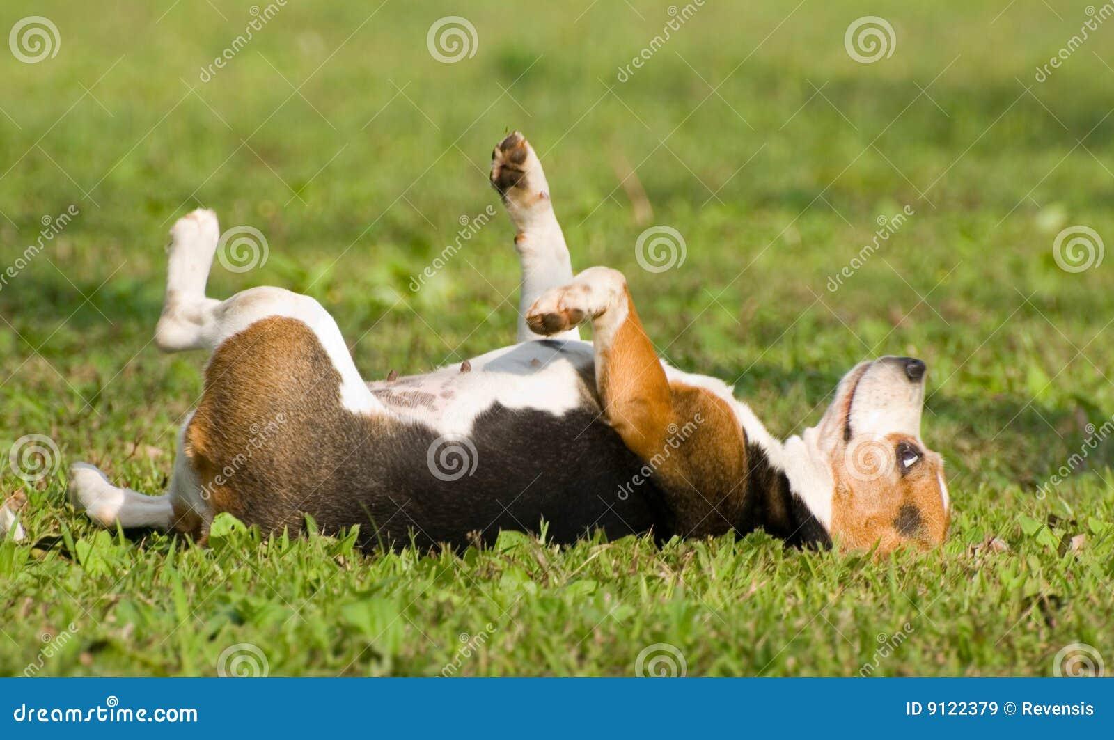 droomuitleg hond