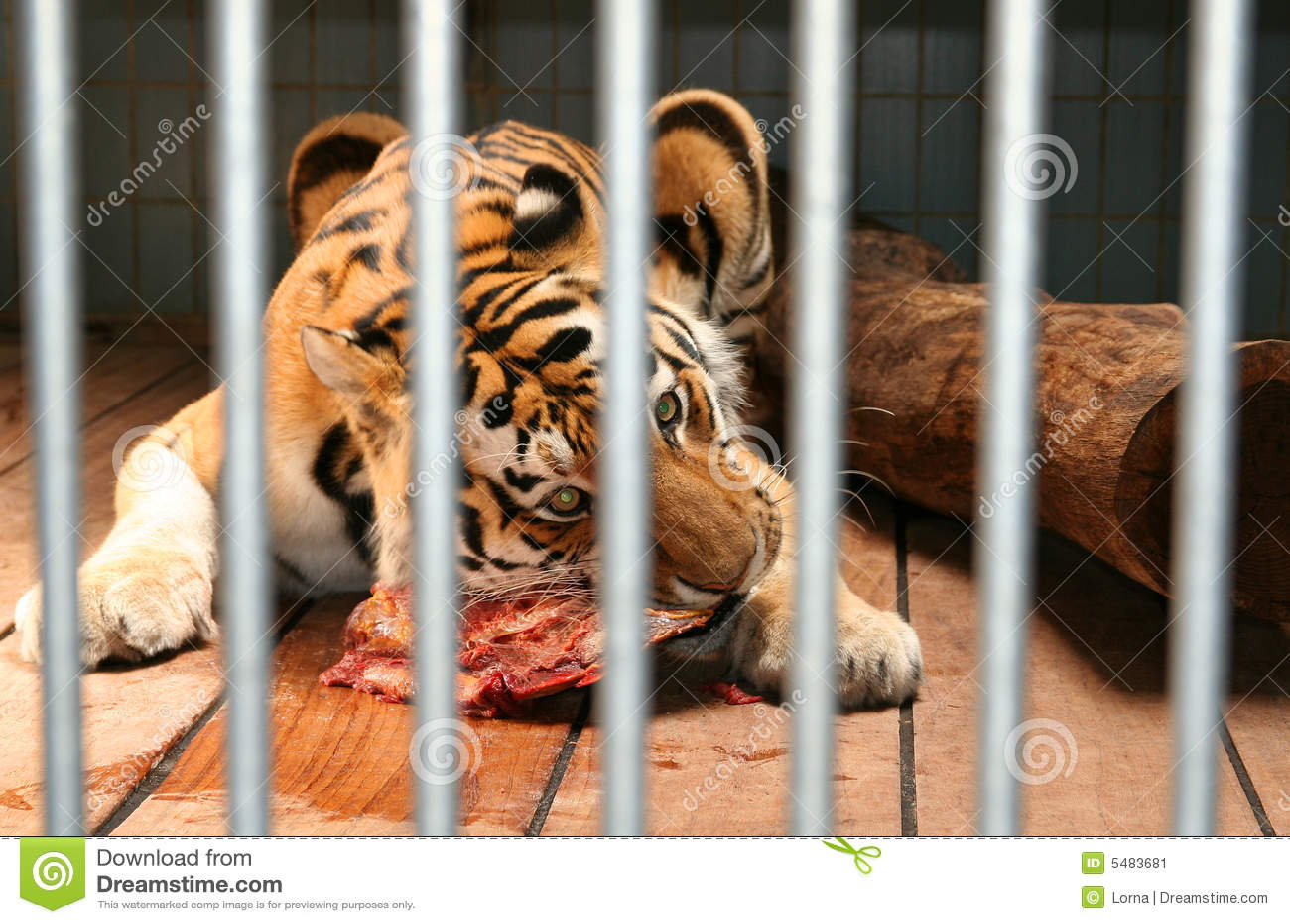 el-tigre-come-la-jaula-de-la-carne-54836