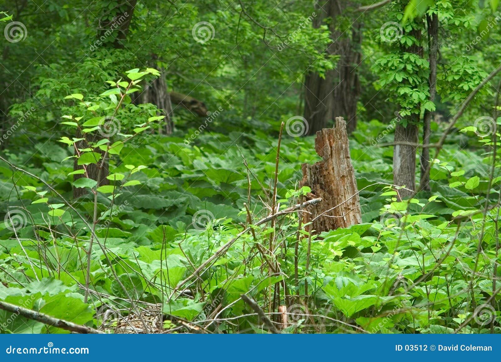 El tocón de árbol rodeado sea vegetación