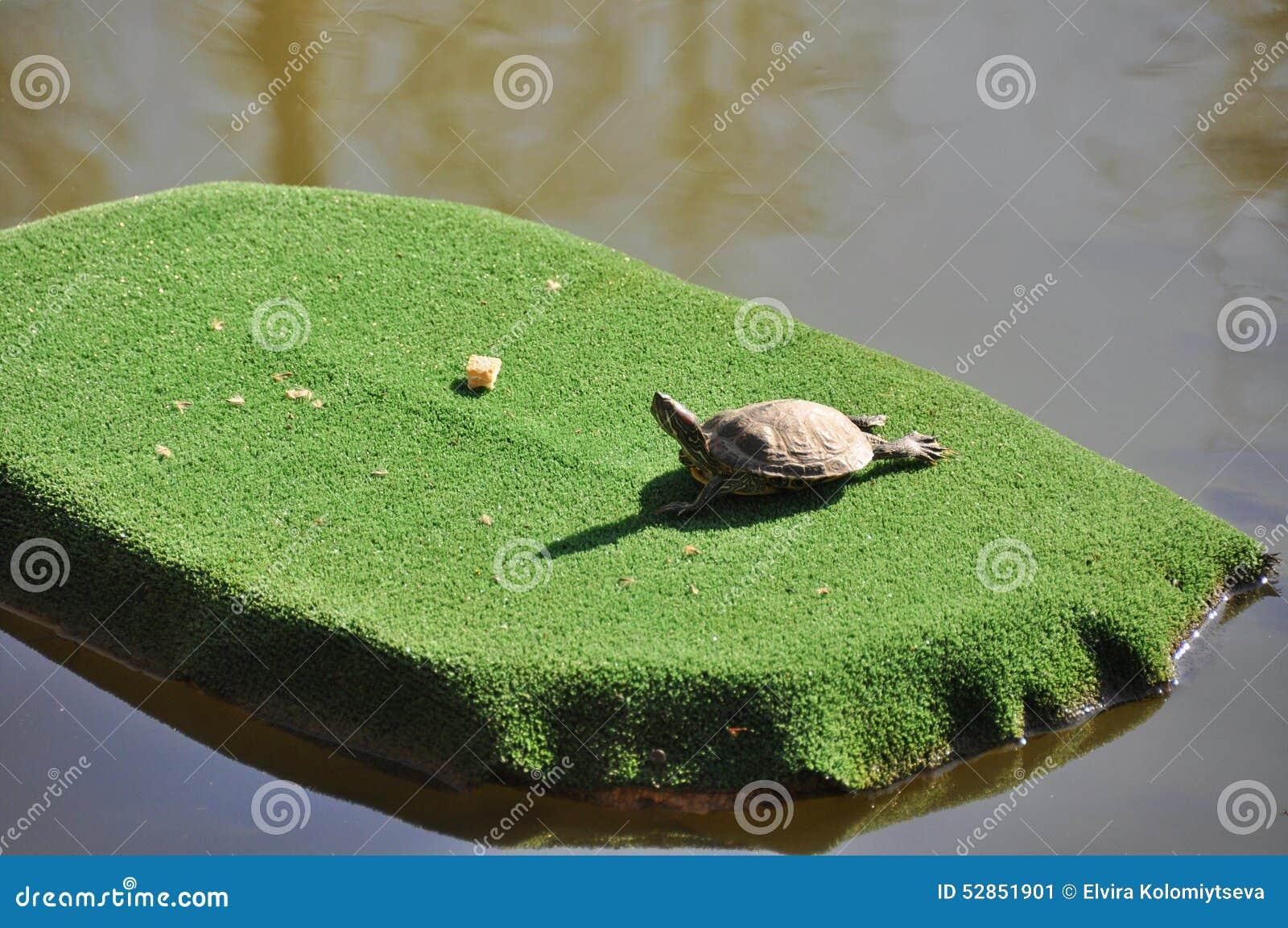 El tomar el sol de la tortuga