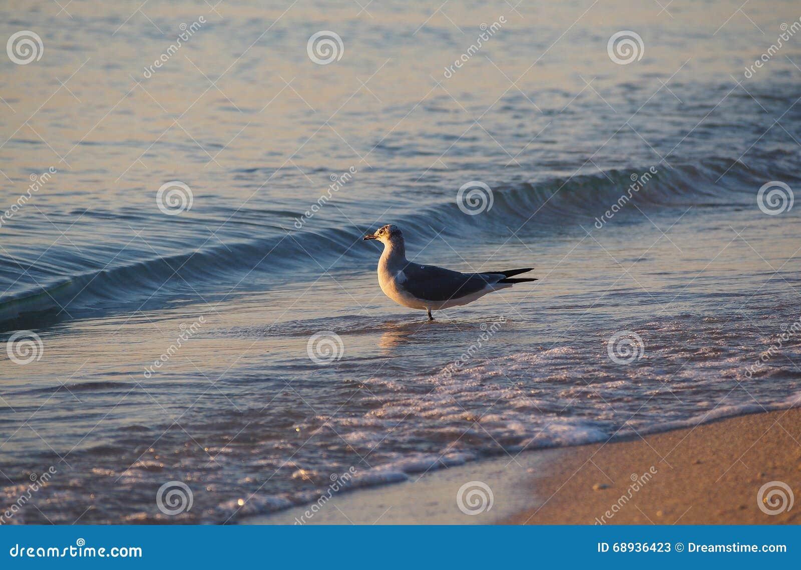 El tomar el sol del pájaro