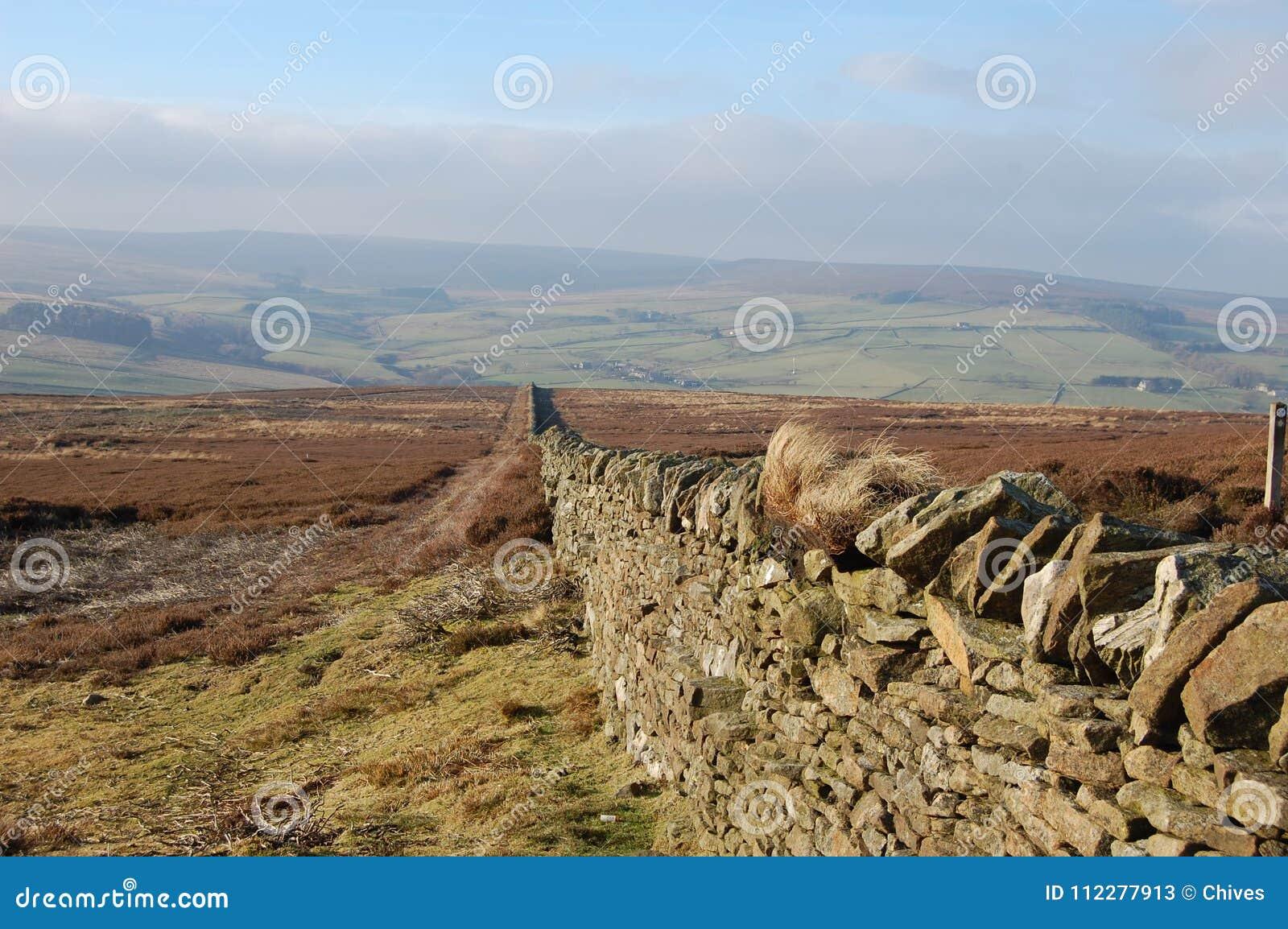 El urogallo seco de la pared de piedra amarra, Blanchland Northumberland