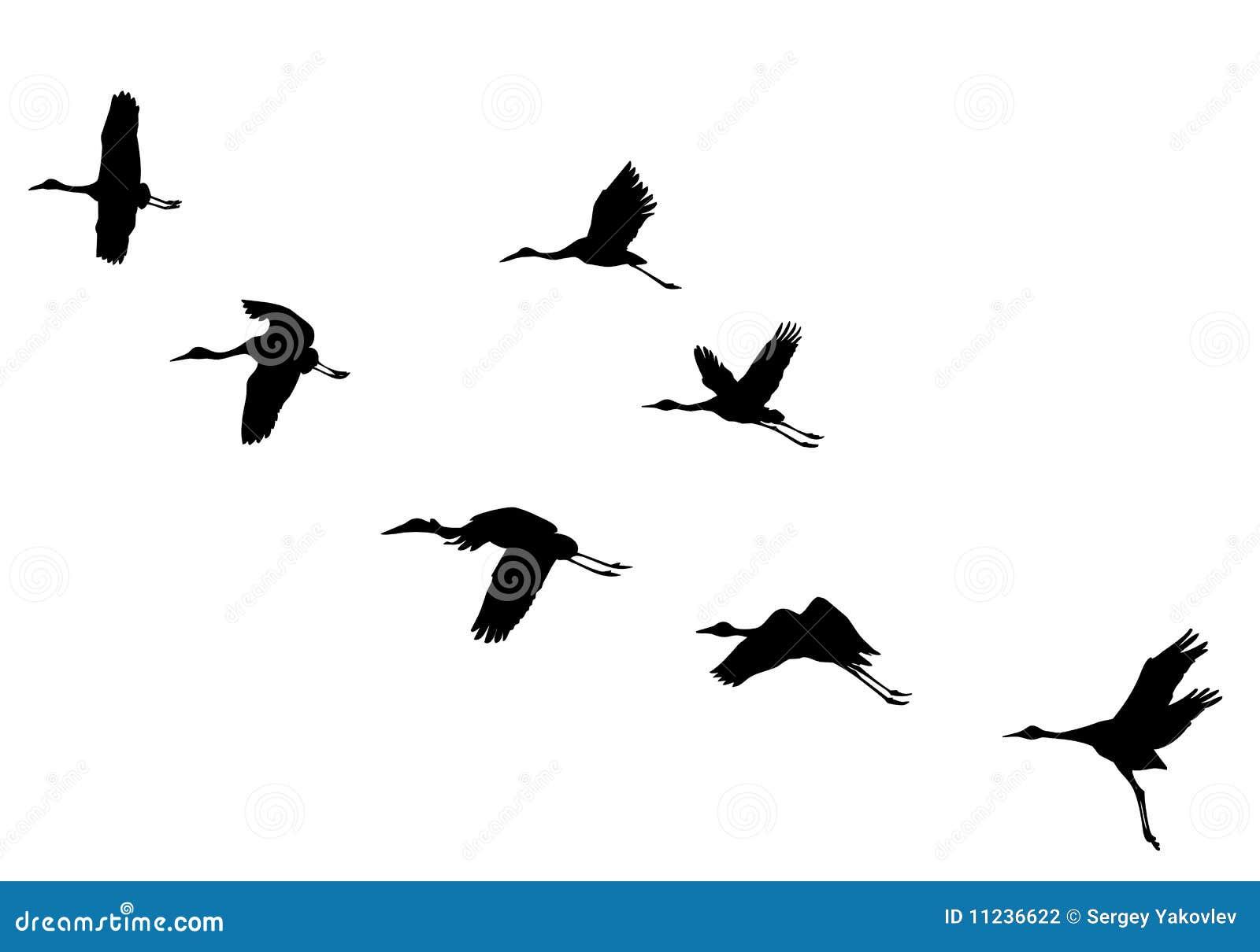 El vector siluetea las grúas del vuelo