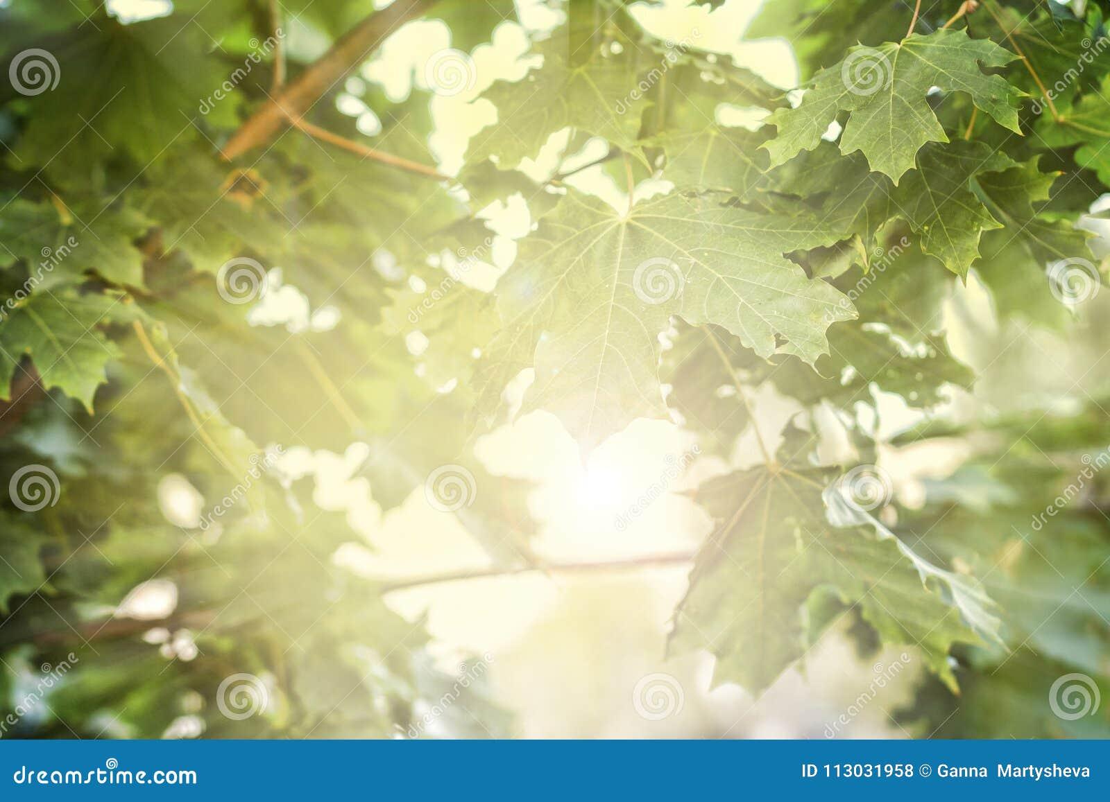 El verano, verde se va, luz del sol, luz, sol, verano, fondo,