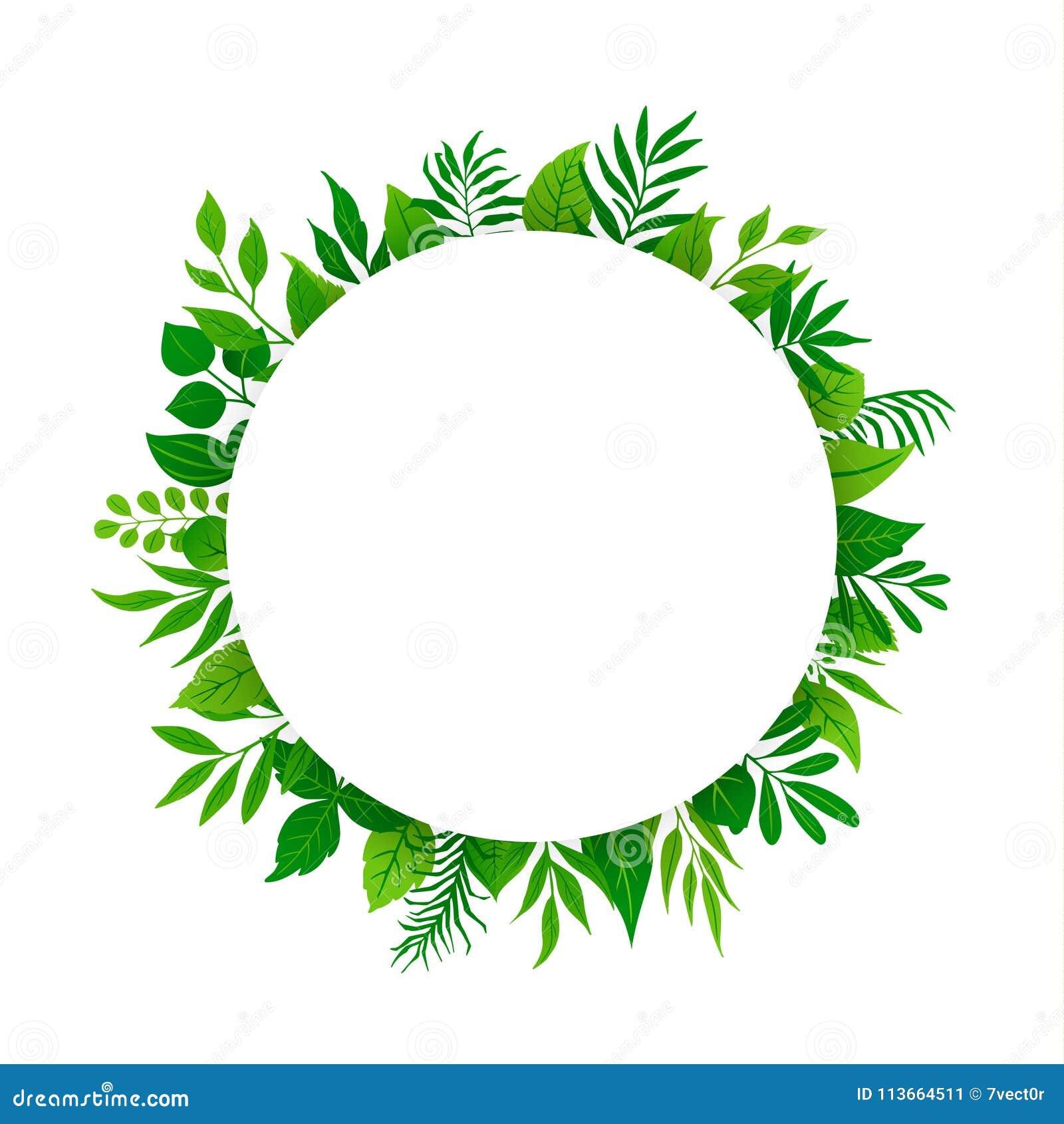 El verde de la primavera del verano deja a verdor del follaje de las plantas de las ramitas de las ramas el marco redondo del cír