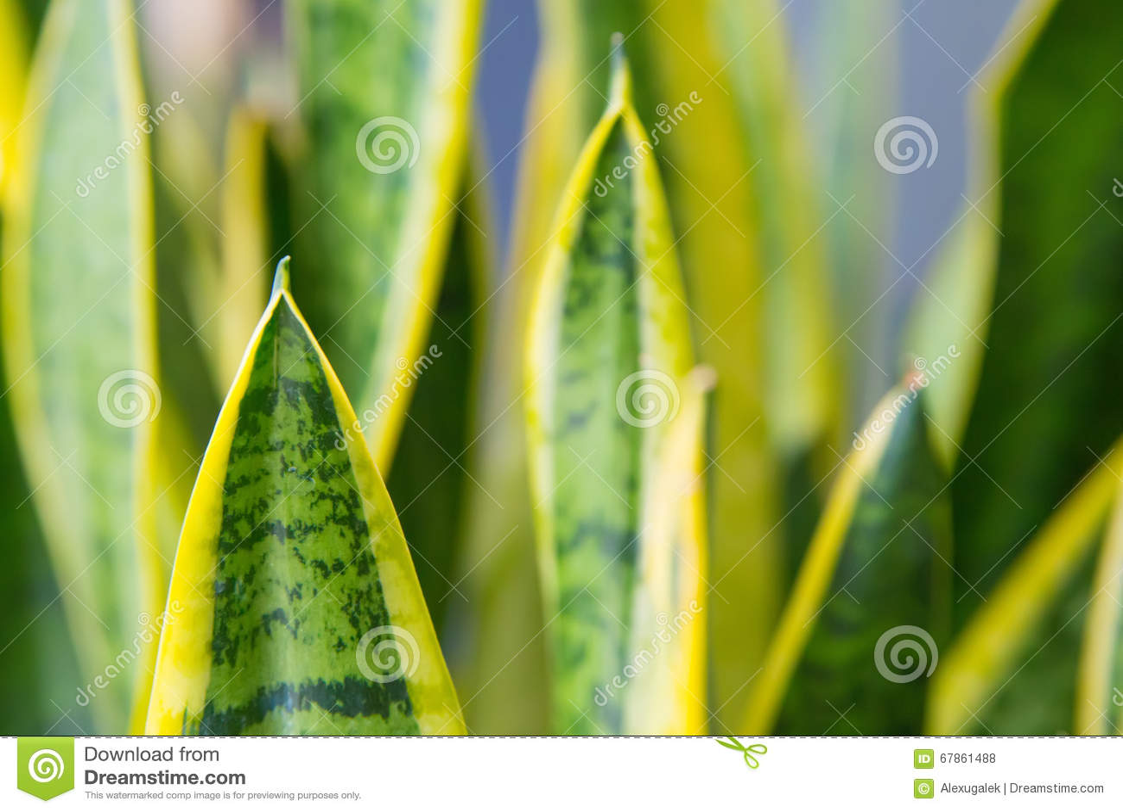 El verde deja el fondo