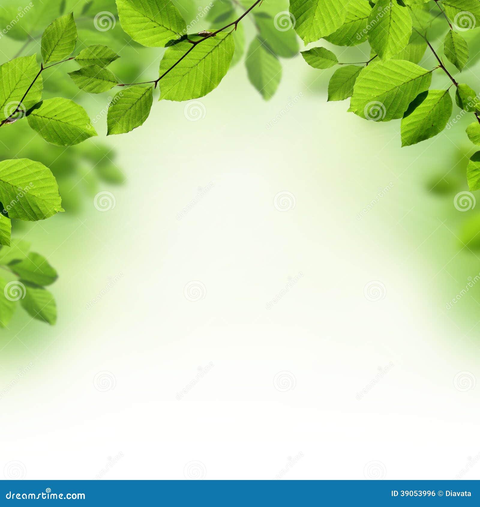 El verde deja el fondo de la frontera