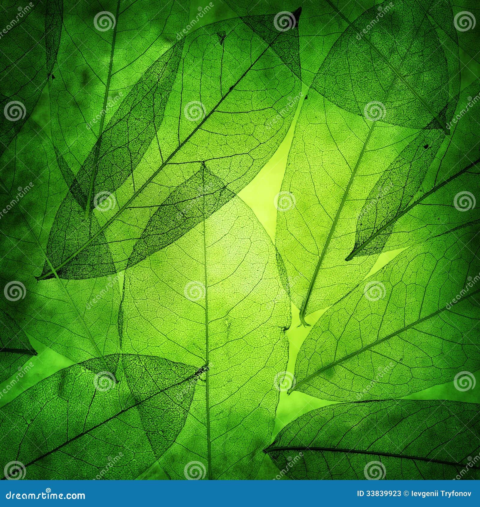 El verde deja el fondo del vintage