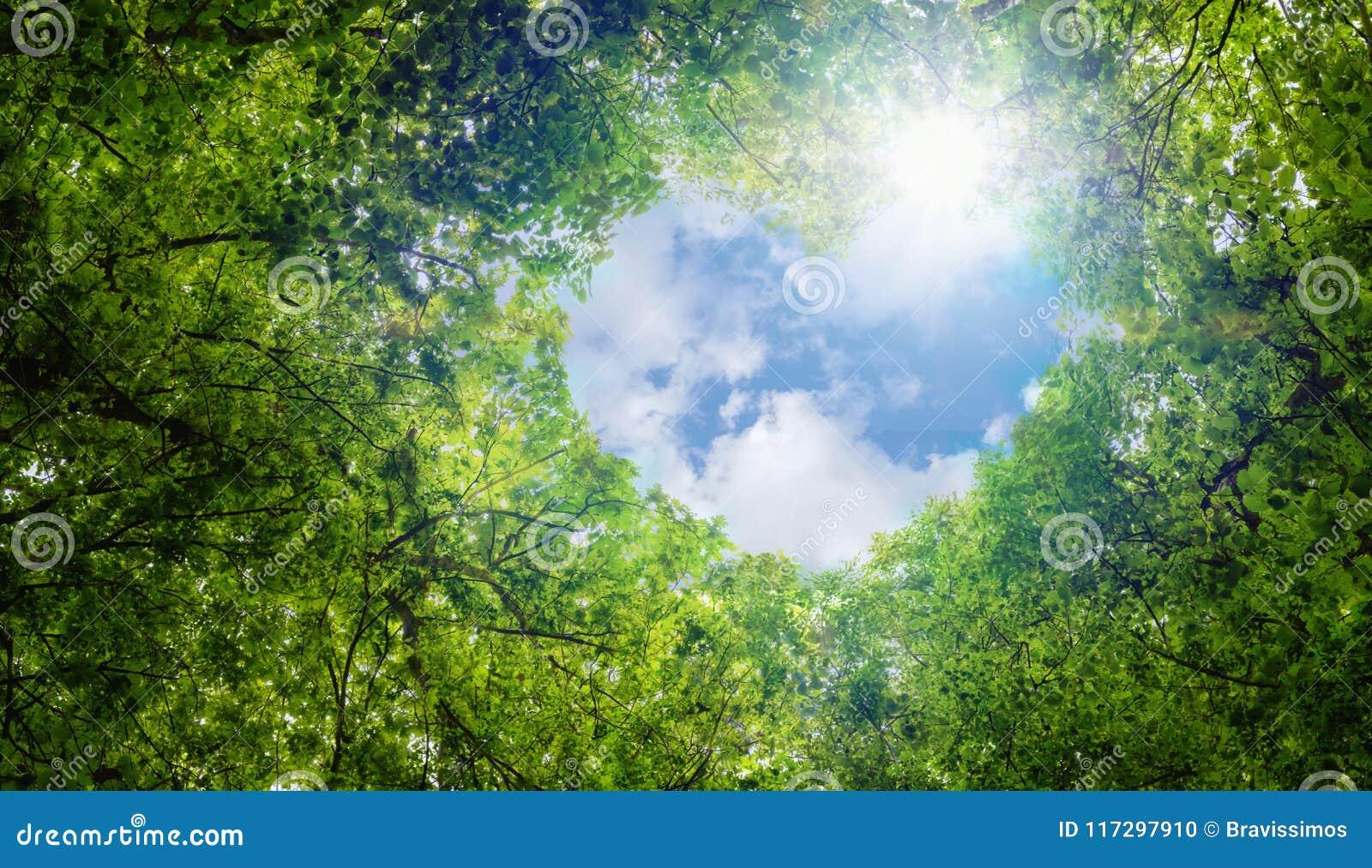 El verde deja el fondo, extracto del fondo del símbolo del amor del eco de la idea del concepto de la ecología de la nube de la f
