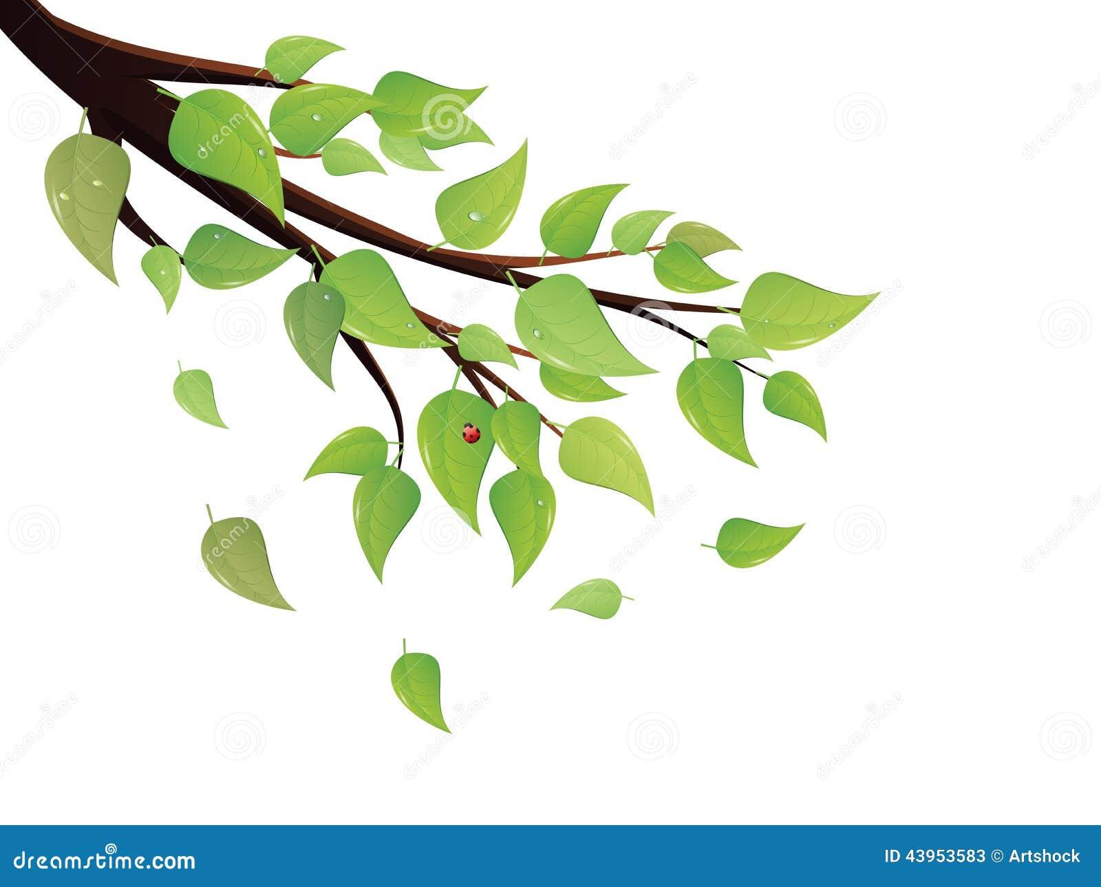 Arbol Con Ramas Animado: El Verde Deja La Rama De árbol Ilustración Del Vector