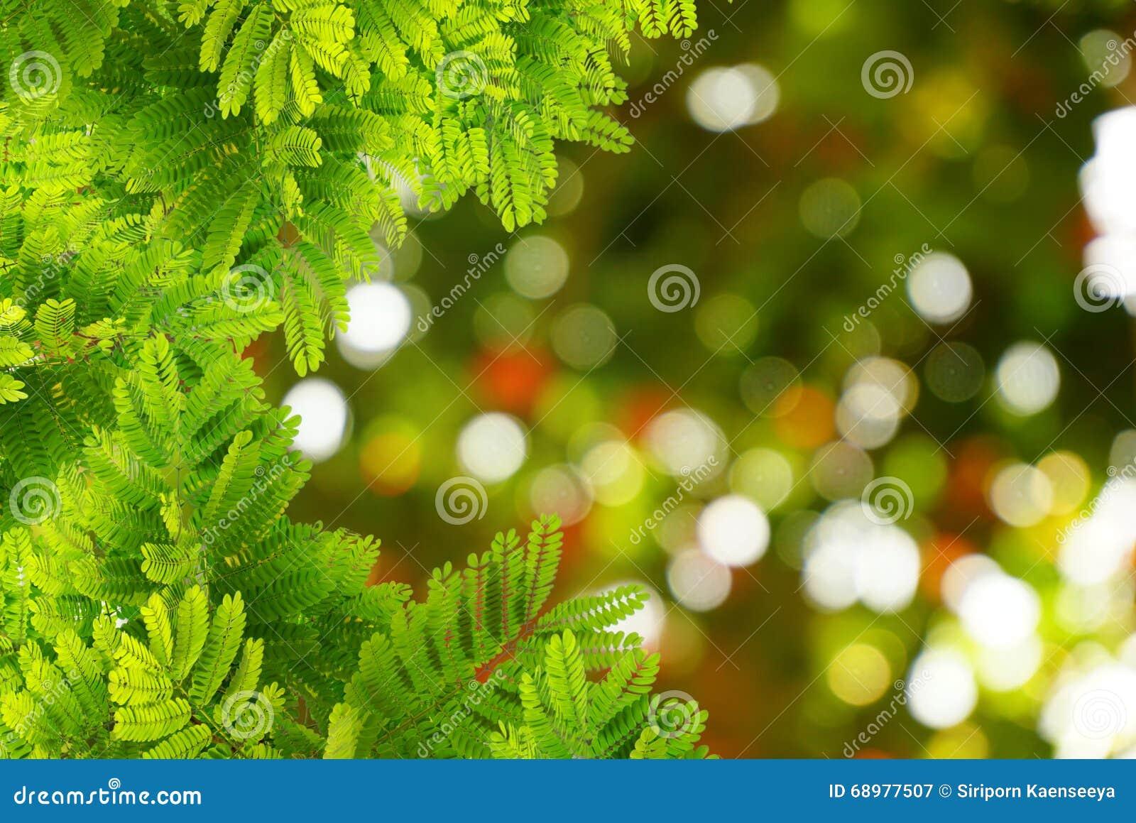 El verde natural deja la frontera con la primavera del bokeh de la falta de definición o el fondo del verano