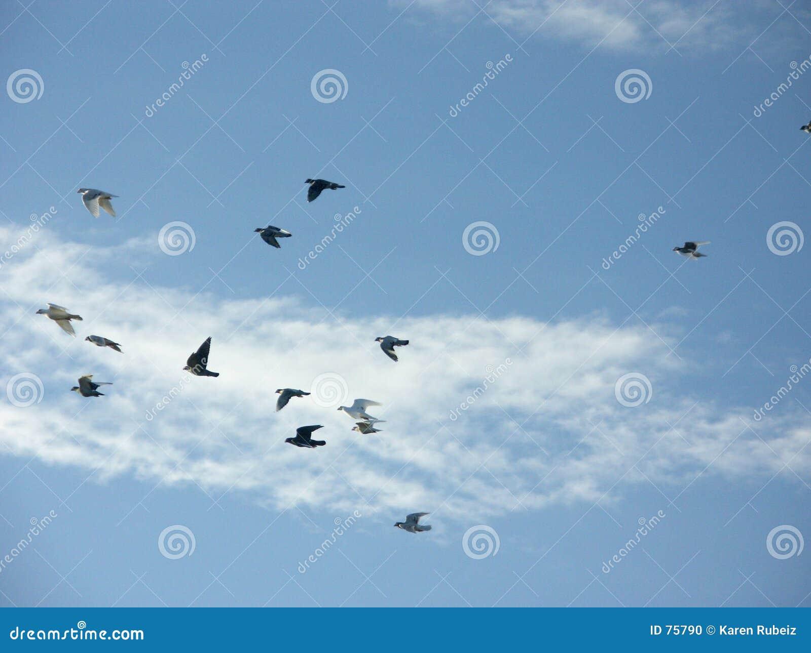 El volar de las palomas