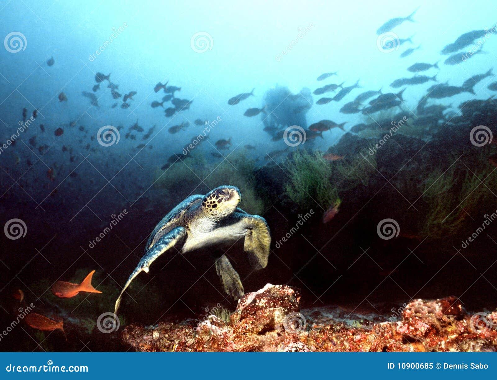 El zambullirse en las islas de las Islas Gal3apagos