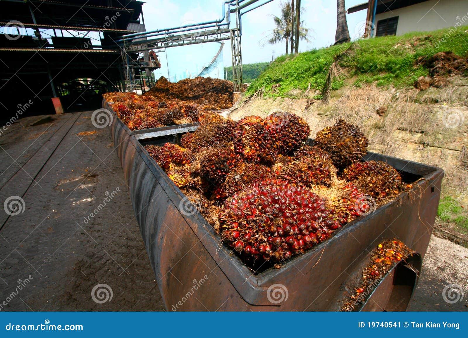 Elaborare dell olio di palma