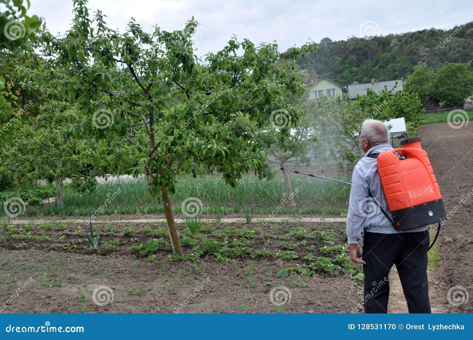 Elaborazione degli alberi nel giardino dai parassiti