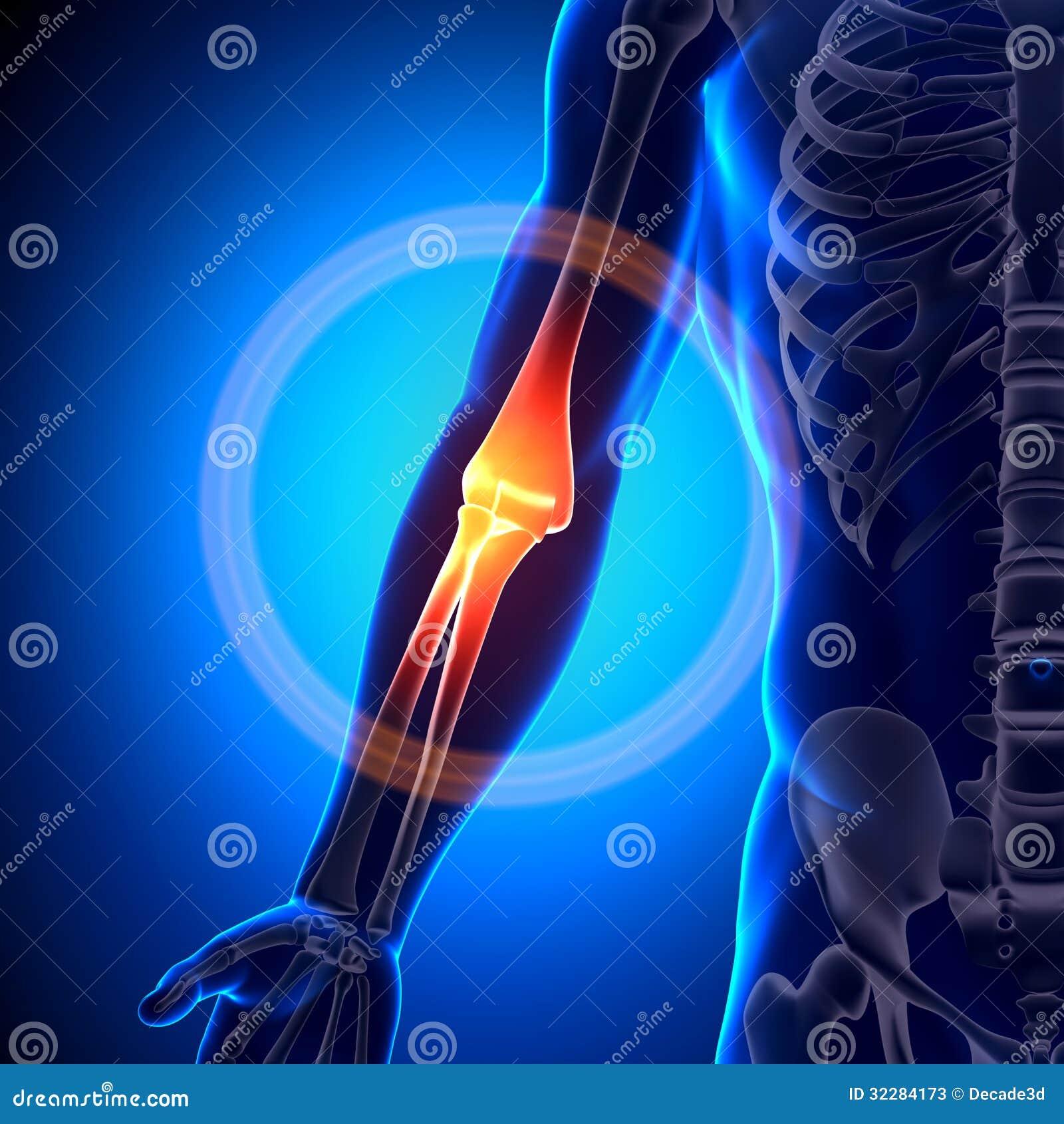 Elbow Anatomy - Anatomy Bones Stock Illustration - Illustration of ...