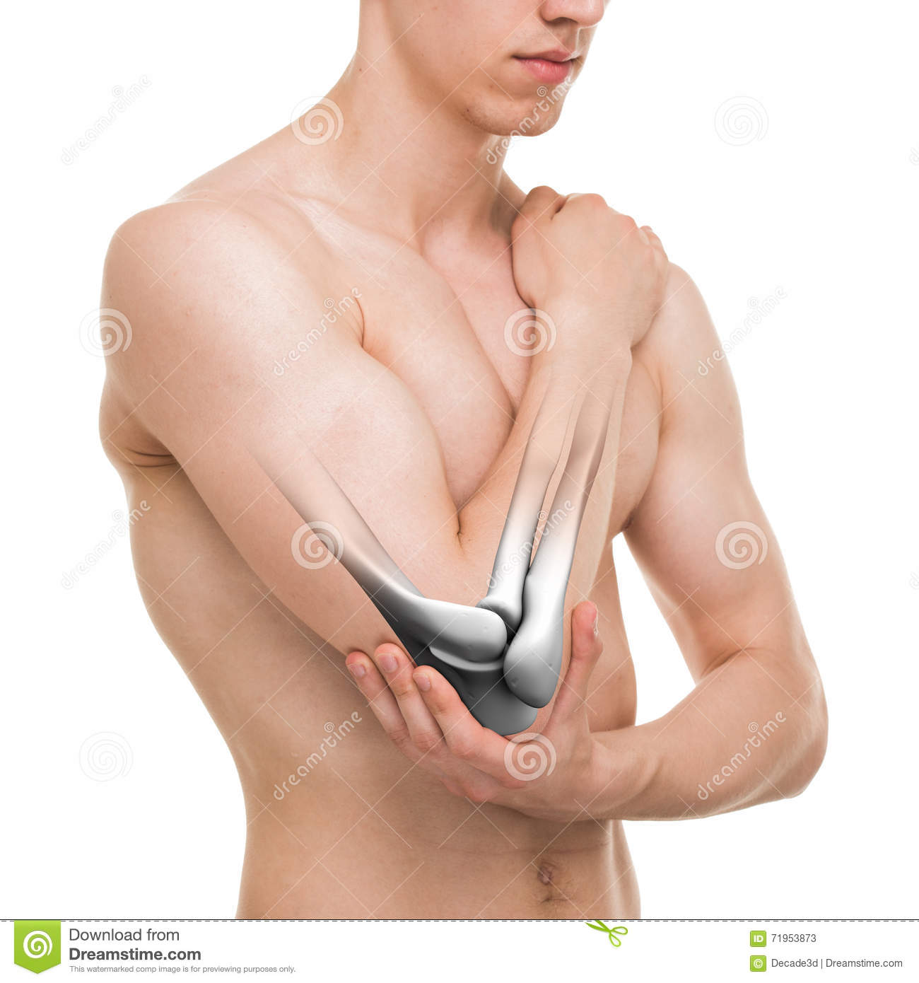 Male Chest Anatomy Man Muscles Front View Stock Photo Image Of