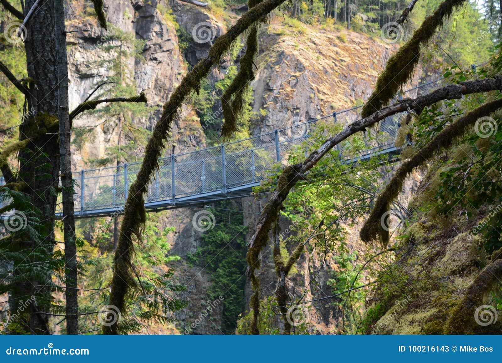 Elch fällt provinzieller Park Campbell River