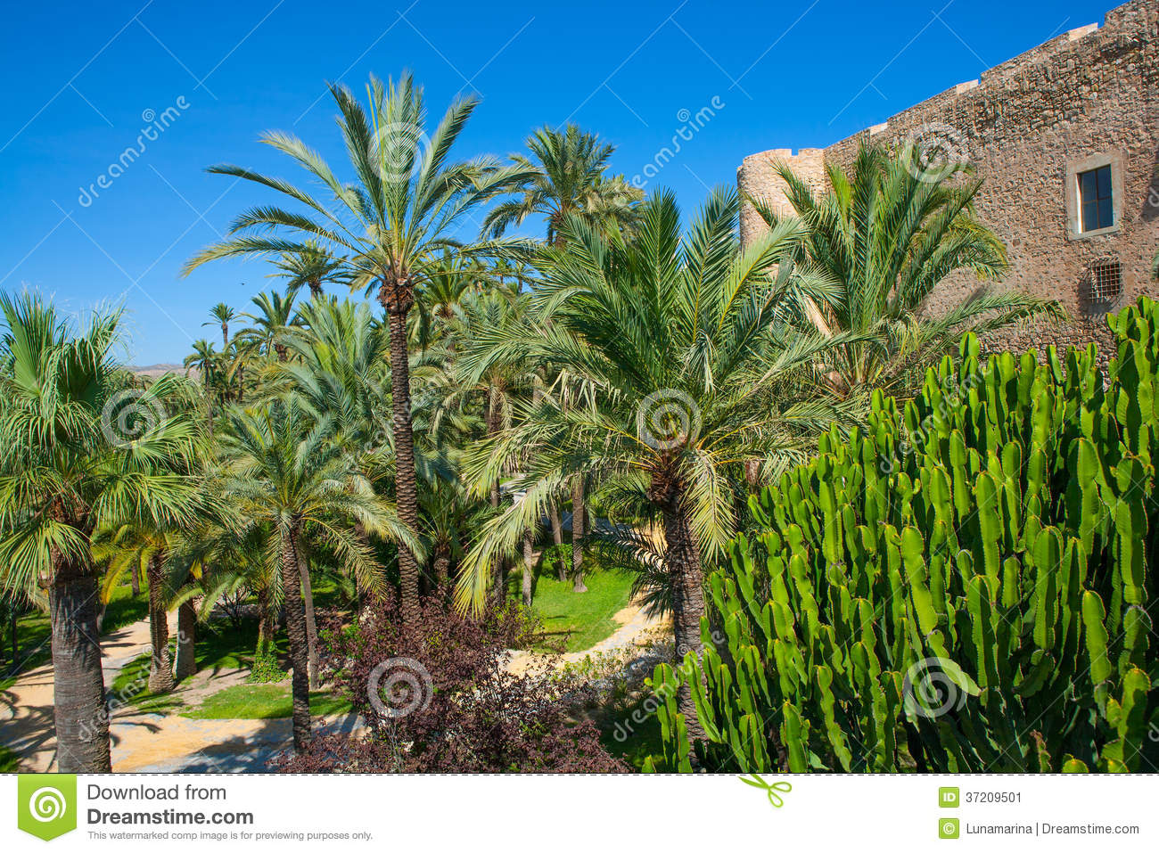 Elche Elx Alicante El Palmeral Palm Trees Park And Altamira Pala ...