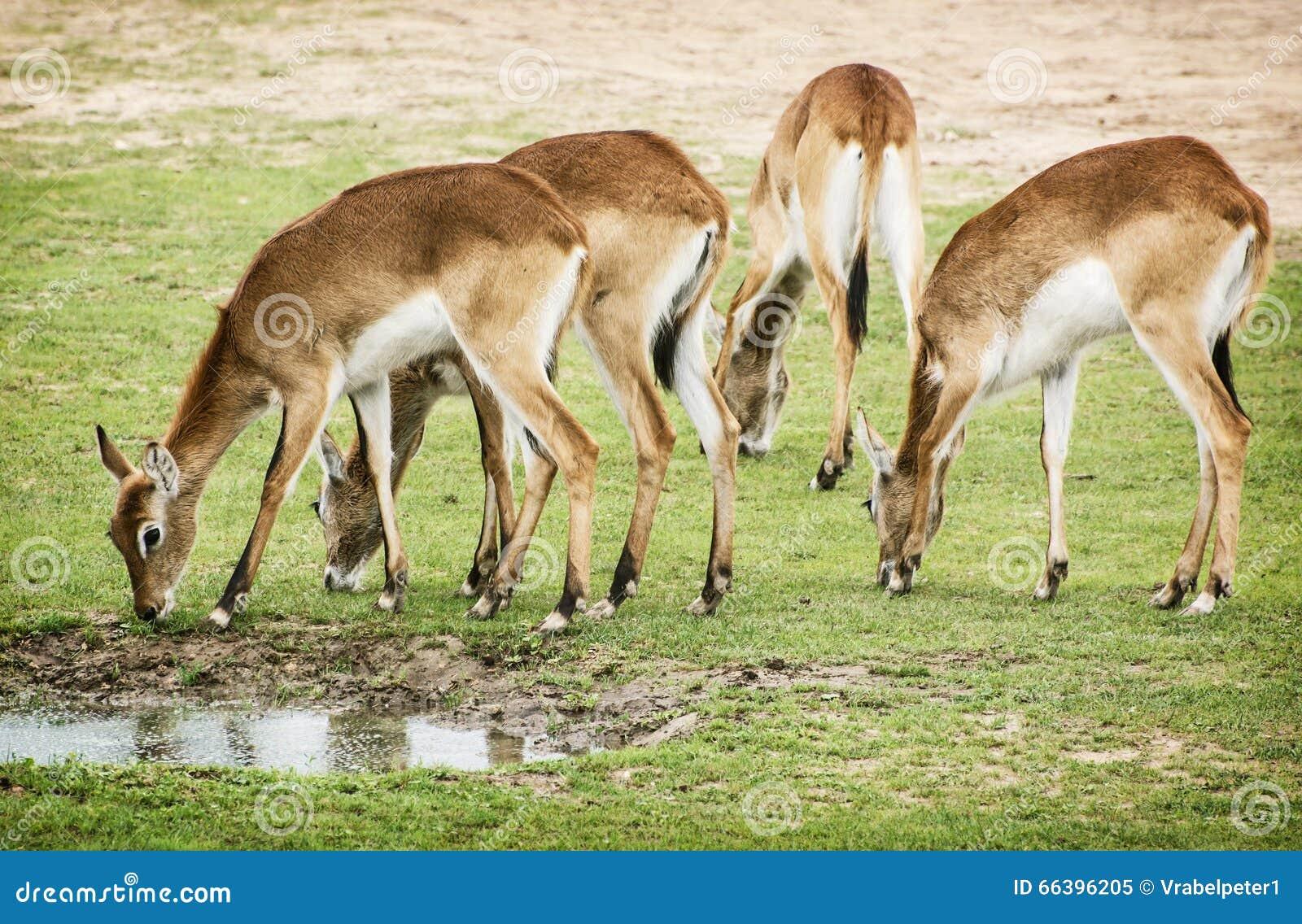 Group Of Animals Pictures | www.pixshark.com - Images