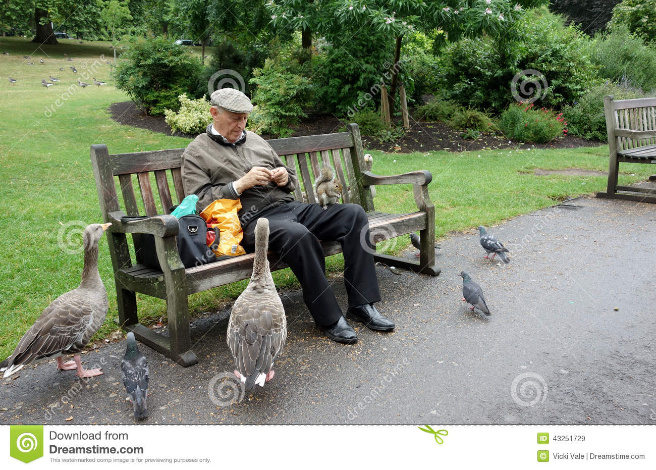 Elderly Man Feeding Geese And Squirrel St James Editorial Stock Image Image