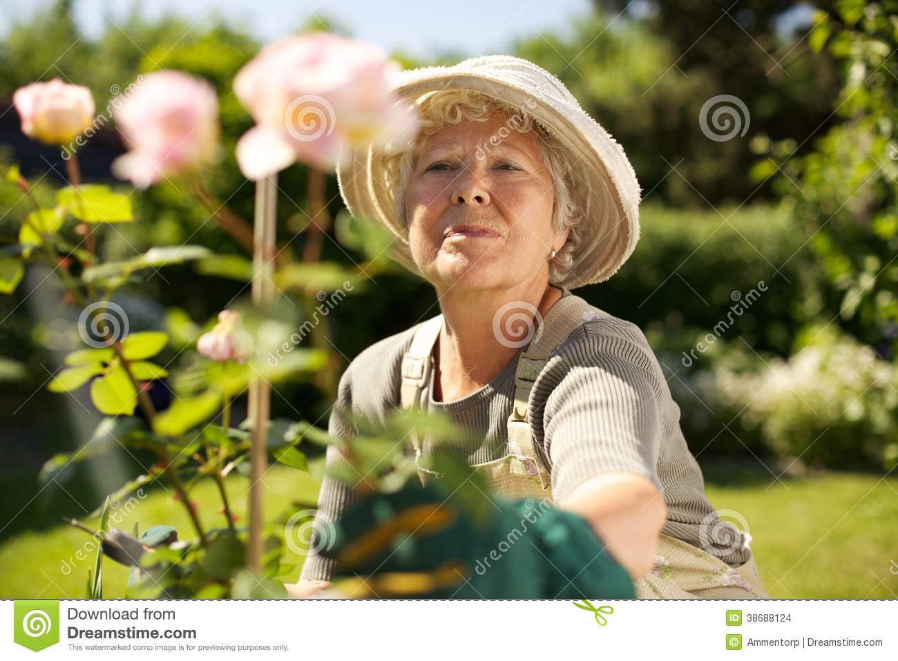 Elderly Woman Gardening In Backyard Stock Images Image