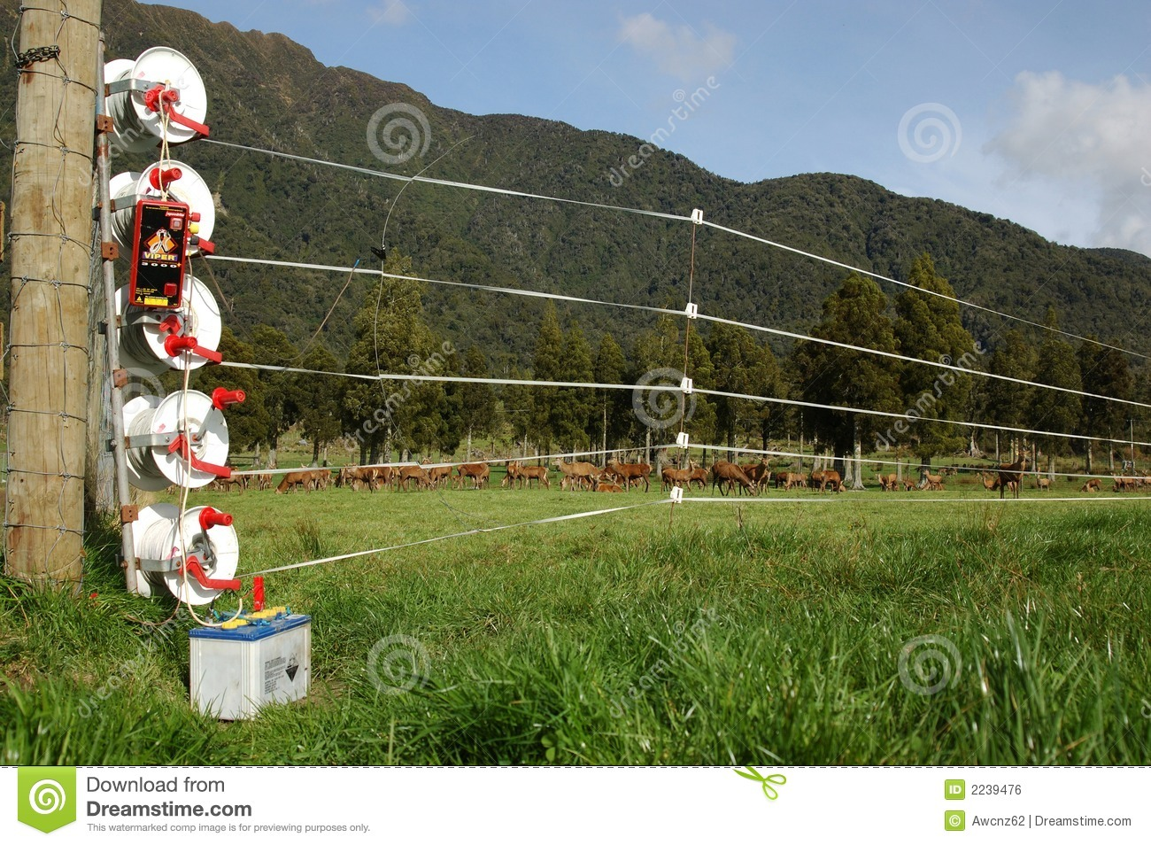 Electric Fencing Stock Photo Image Of Herds European