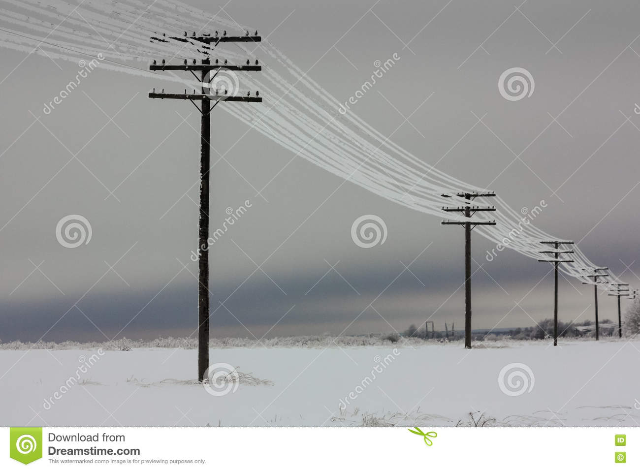 Electric Poles Power Lines : Electrical power lines with hoarfrost on the wooden