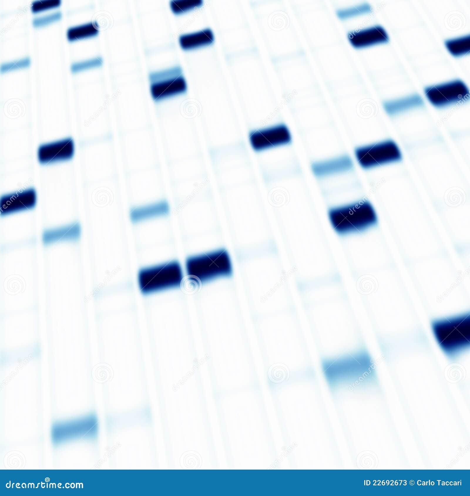 Electroforesis del gel de la DNA