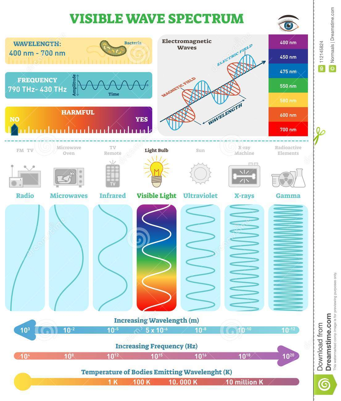 Electromagnetic Waves: Visible Wave Spectrum. Vector illustration diagram with wavelength, frequency and wave structure