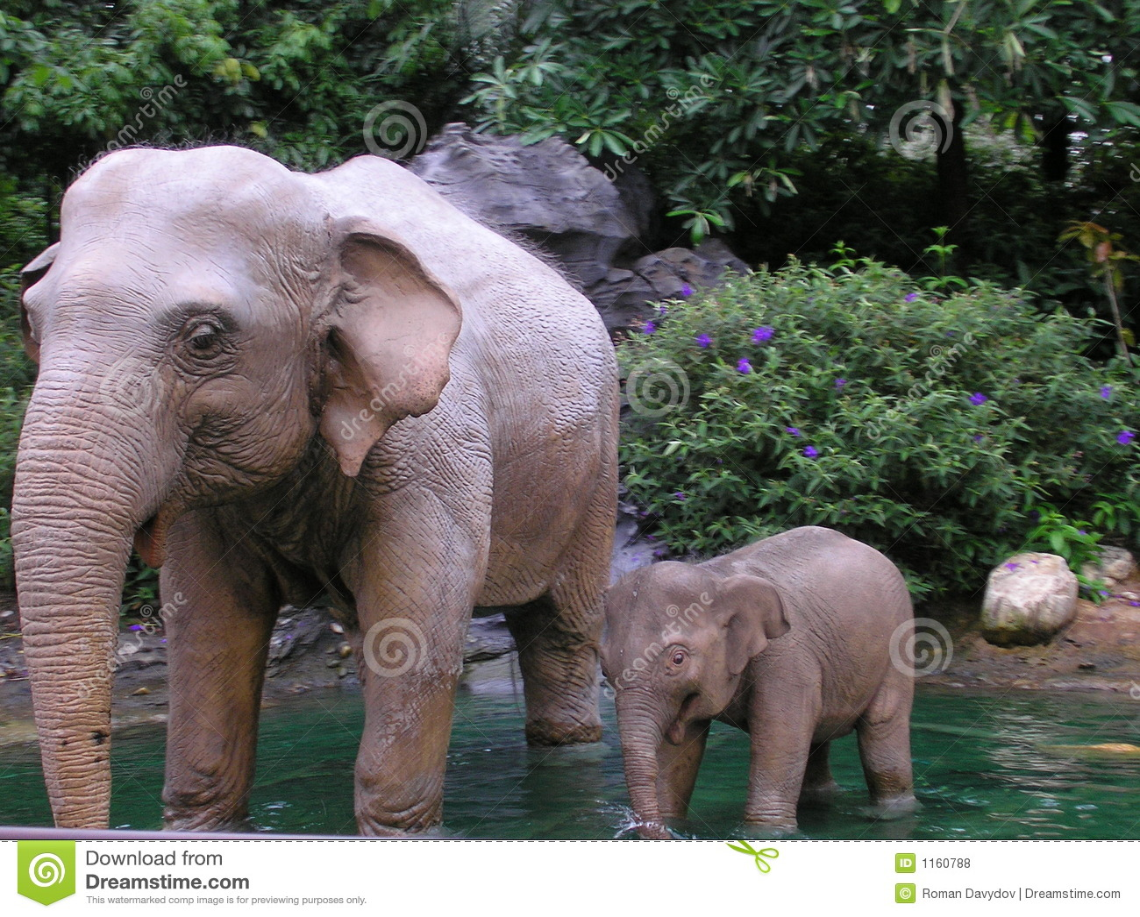 Elefant系列s