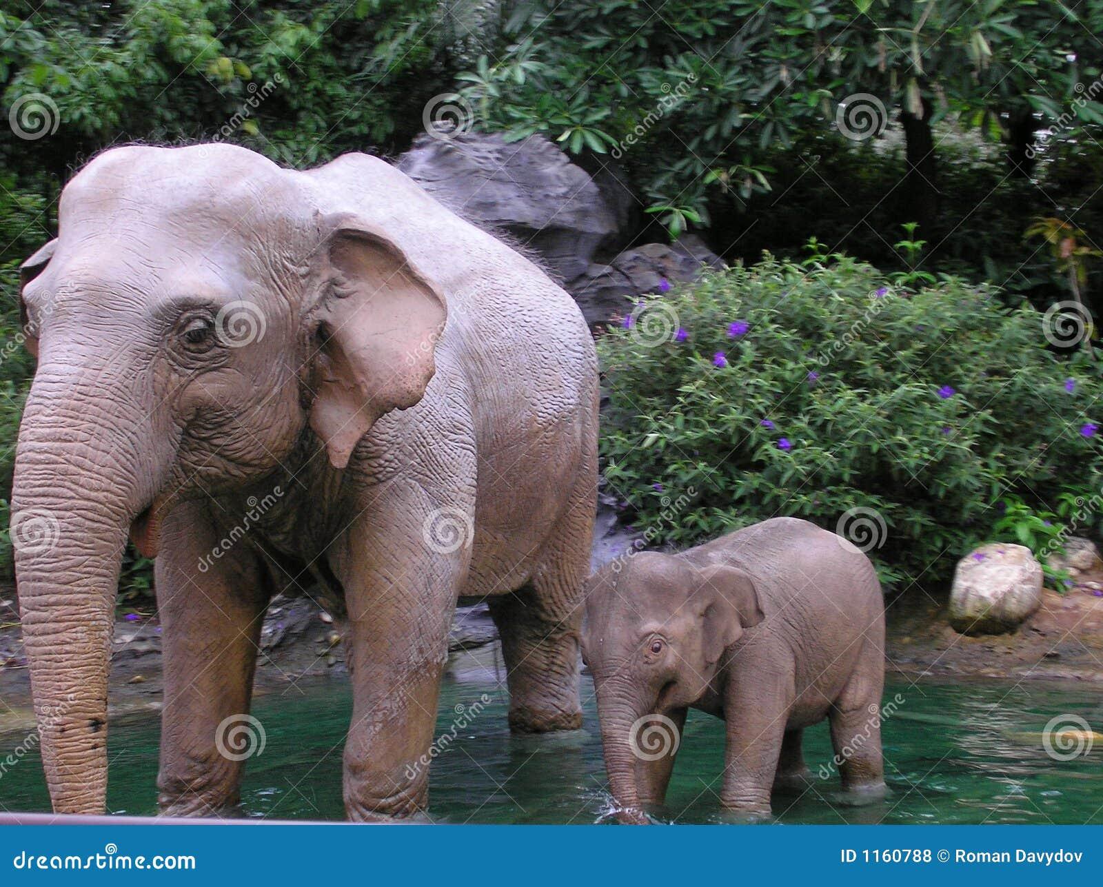 Elefant οικογένεια s