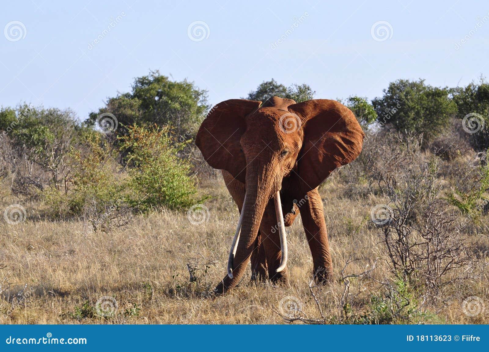Elefant Afrika Stockbild Bild Von Grün Bettwäsche Elefanten