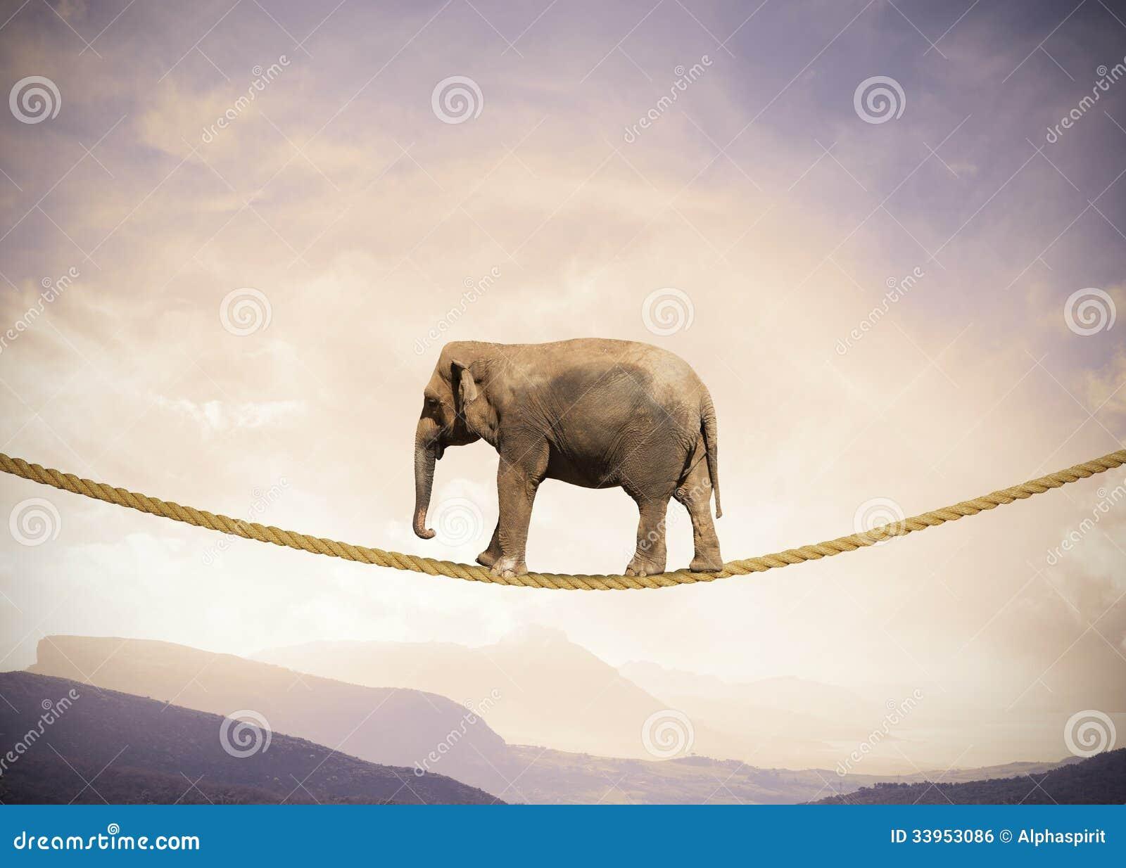 Elefant auf einem Seil