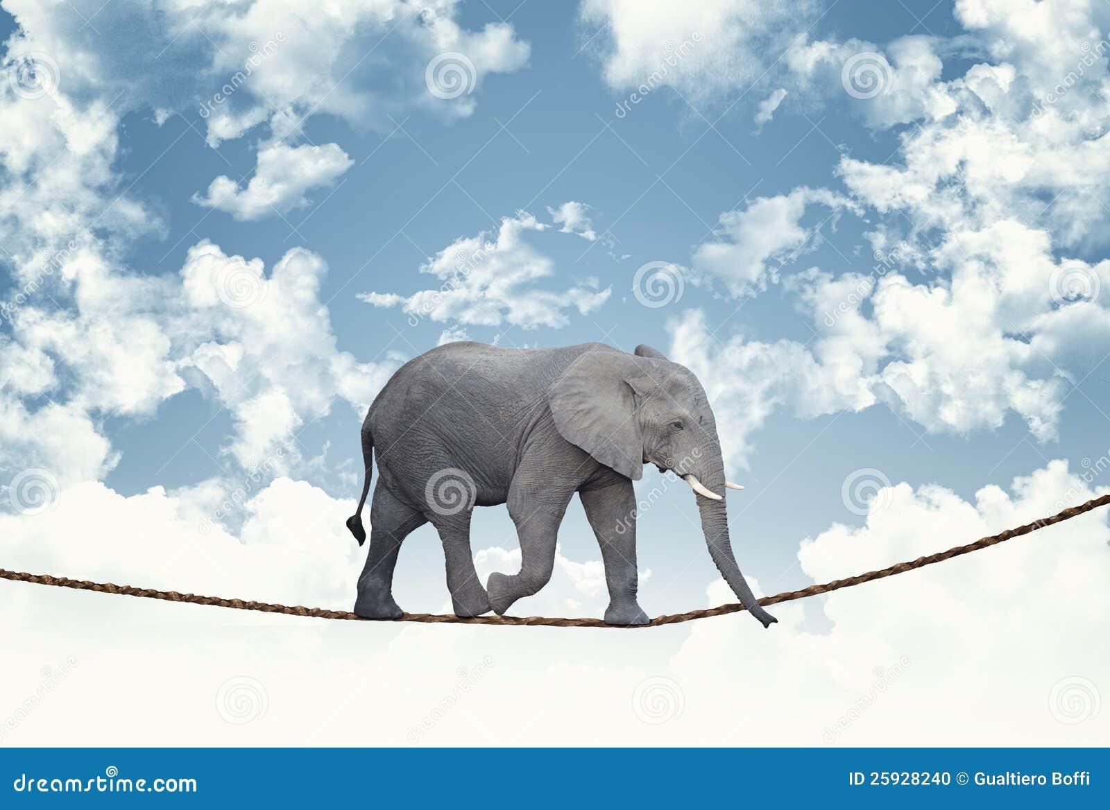 Elefant auf Seil