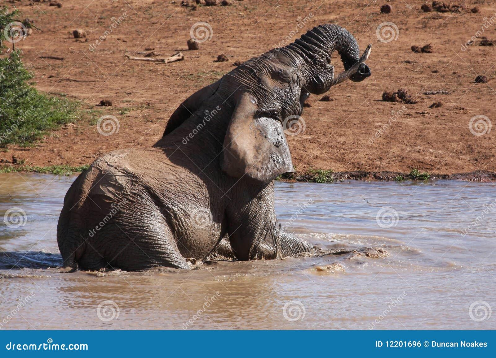 Elefant-Baden