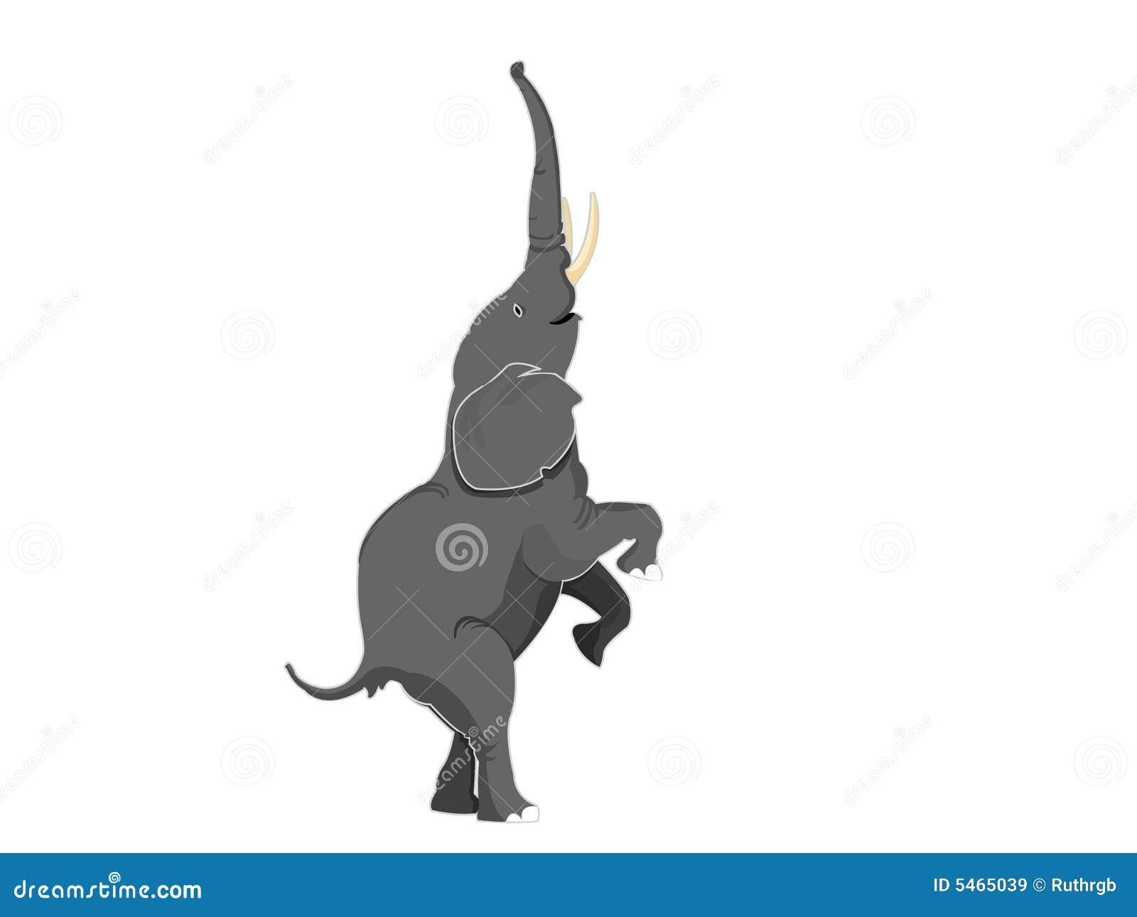 Elefant, der geradeaus Fahrwerkbeine steht