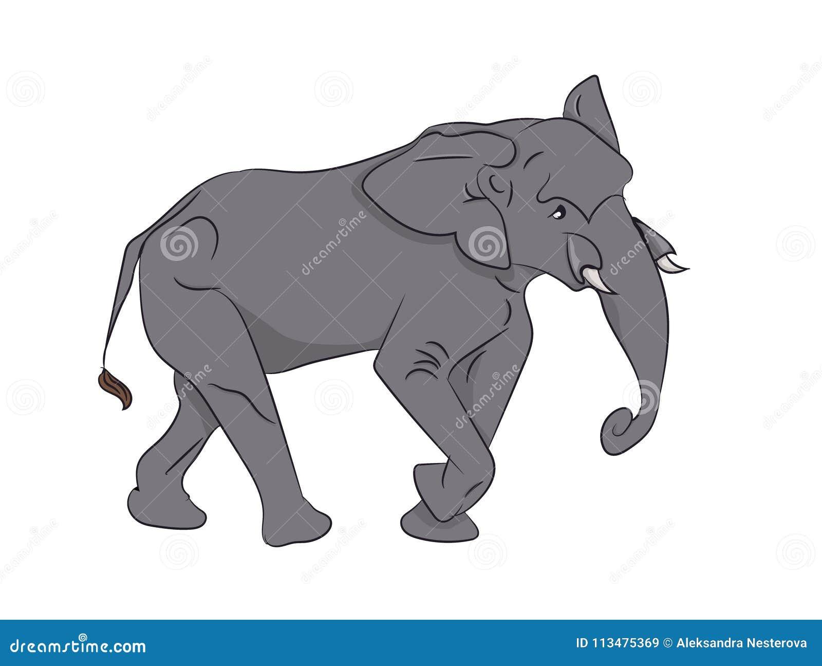 Elefant, Farbvektor