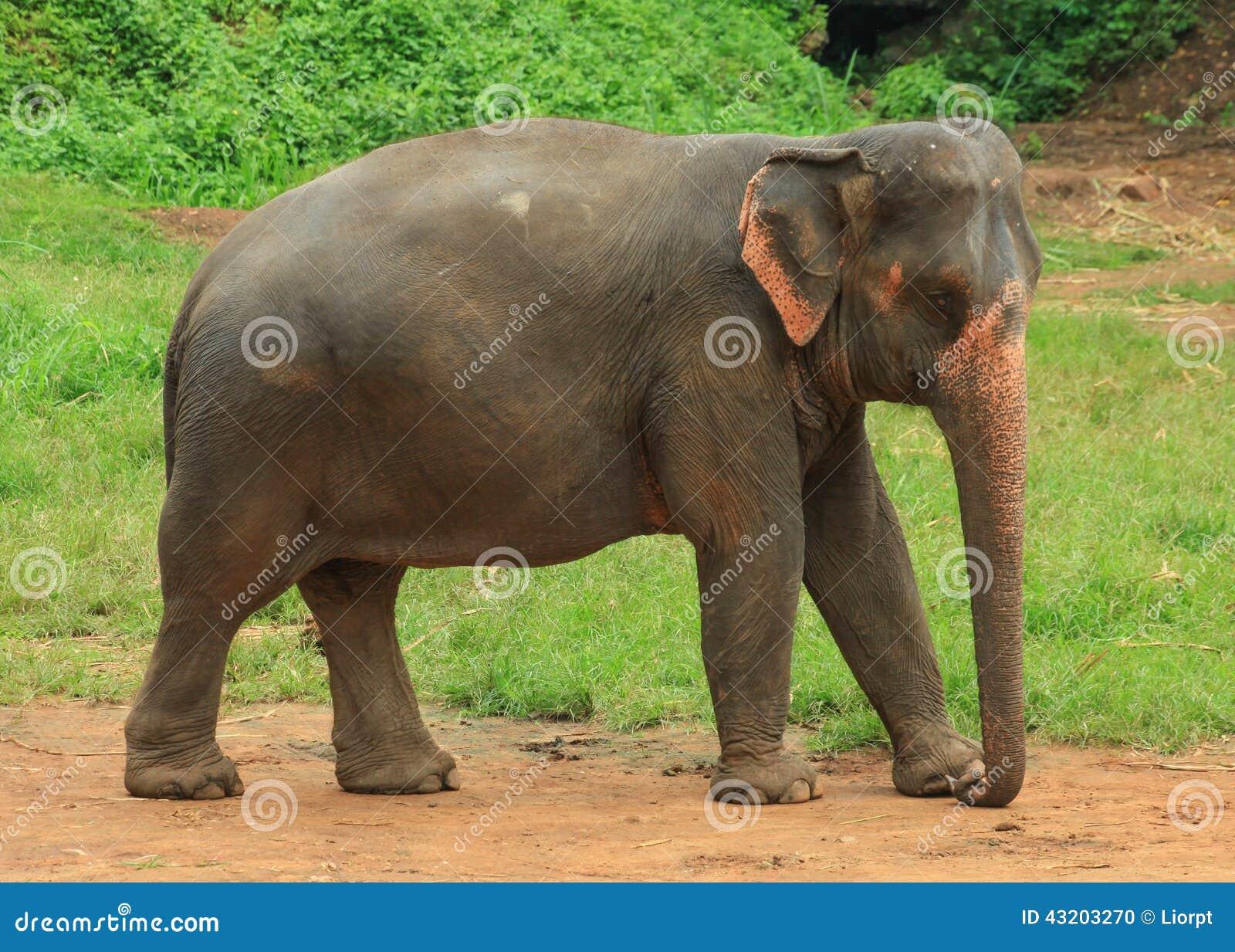 Download Elefant i en parkera arkivfoto. Bild av tanzania, natur - 43203270